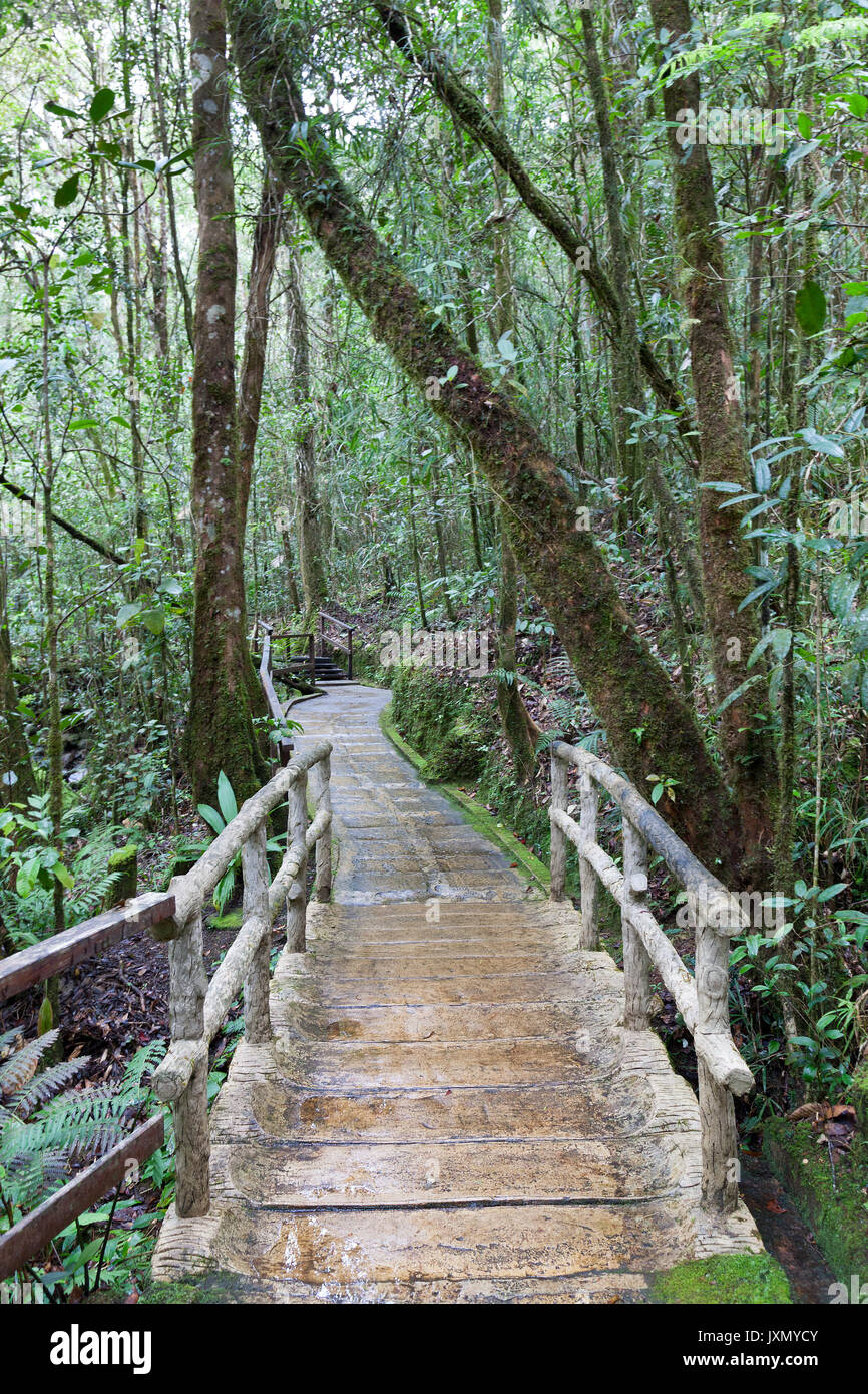 Wooden path in a tropical forest, Kinabalu Park, Borneo - Stock Image