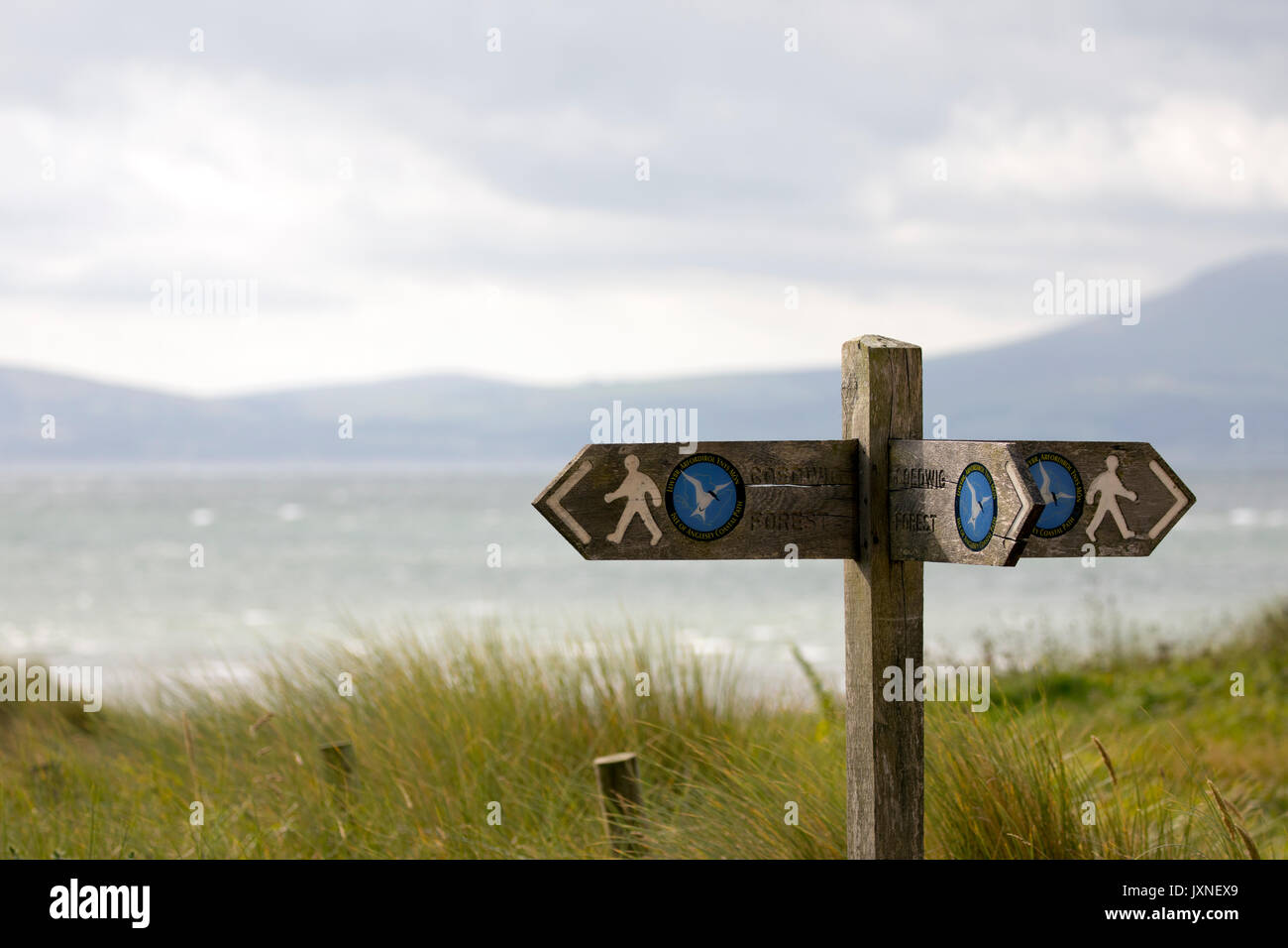 Wooden direction post way marker showing direction for Wales Coastal Path at dunes on Newborough Warrren Beach with the sea and hills in the distance - Stock Image