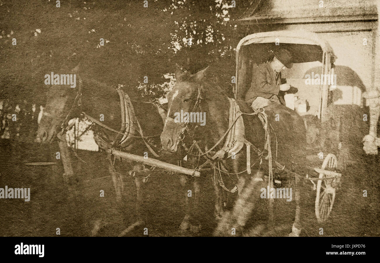 Two horses hitched to a a carriage with a man sitting in the carriage Minnesota 1907-1908minnesota Stock Photo