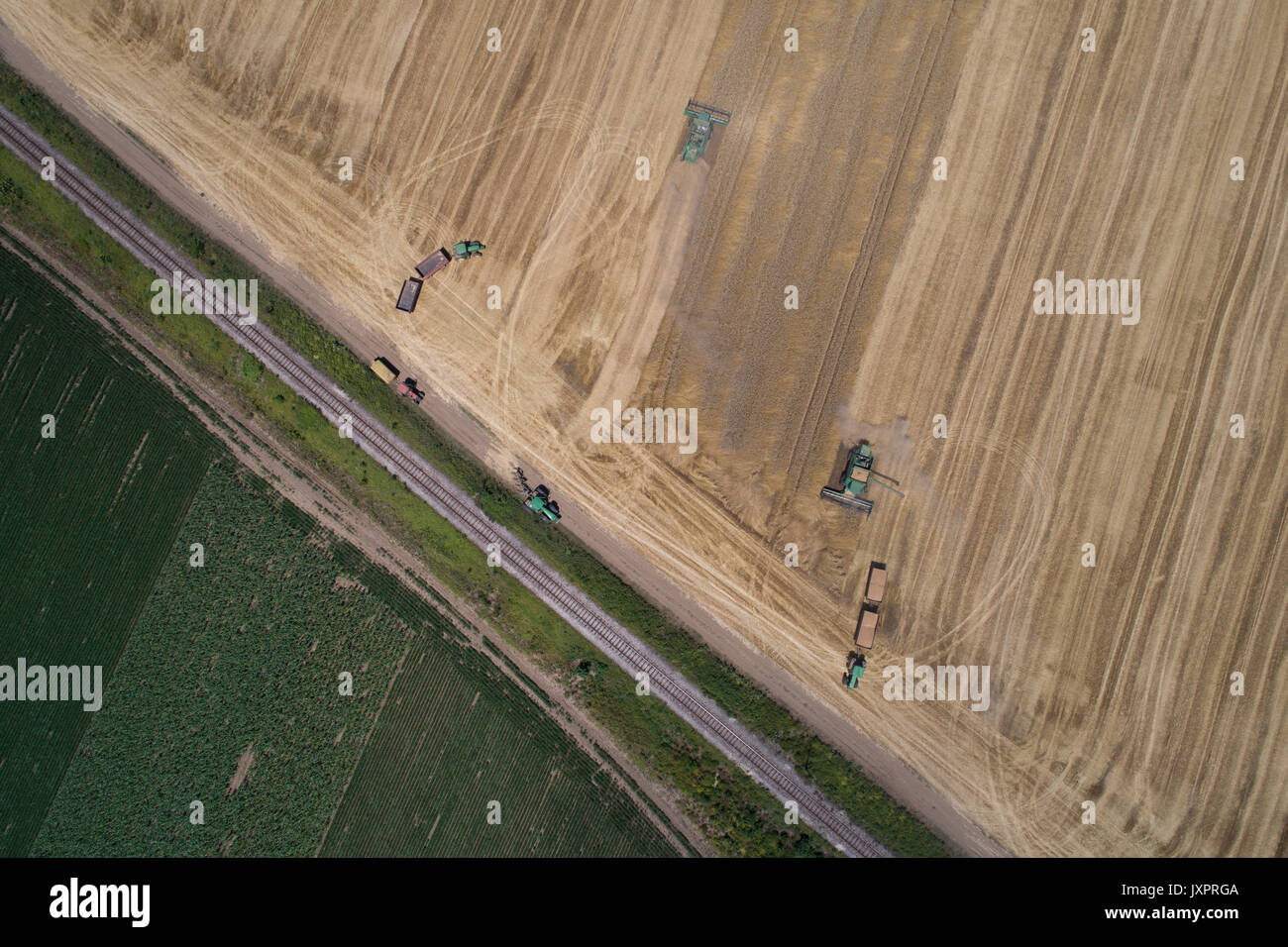 Aerial image of combine harvesters and tractors working in ripe golden wheat field. Harvesting in summer time - Stock Image