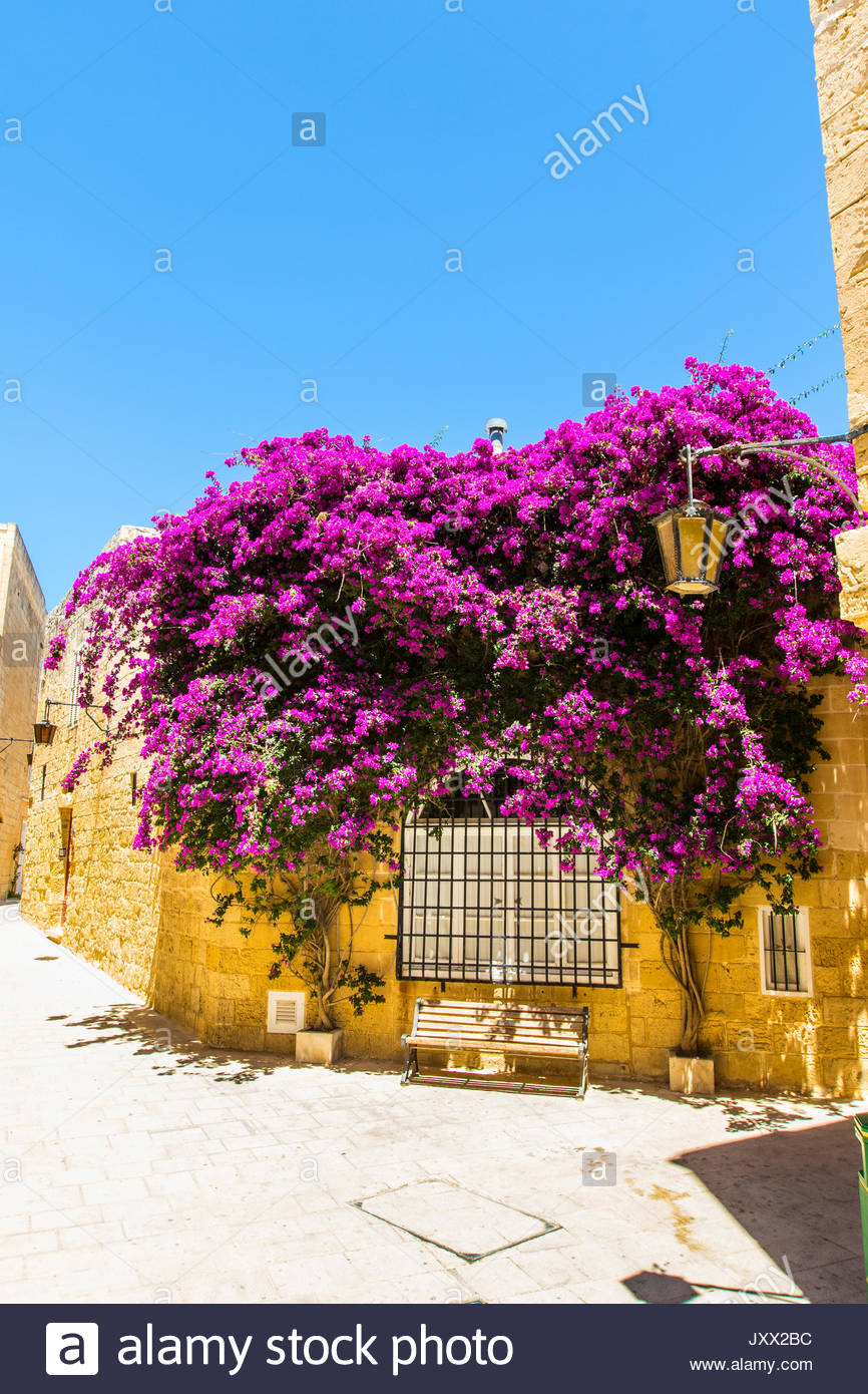 bench under a purple flowering bougainvillea in a narrow lane of mdina, malta Stock Photo