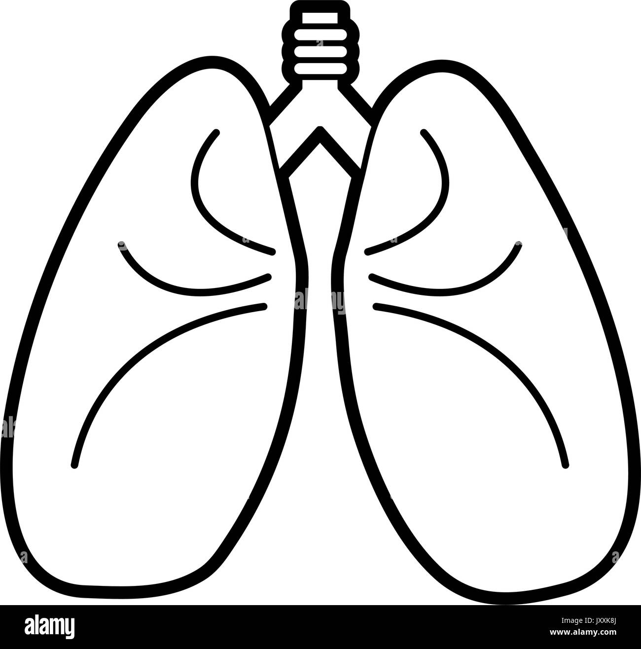 lungs vector illustration - Stock Image