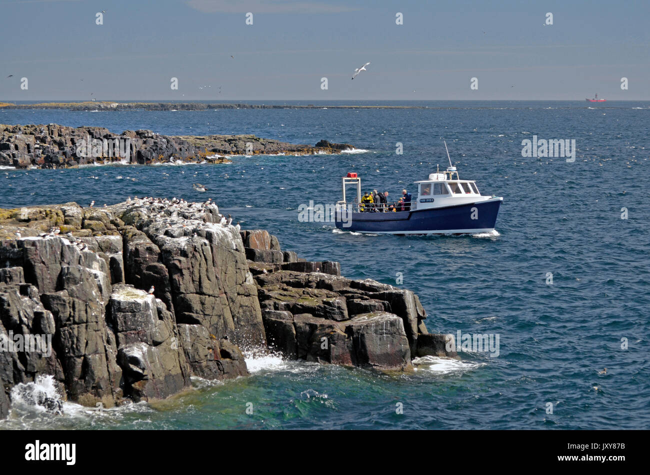 dive boat off the farne islands northumberland england Stock Photo