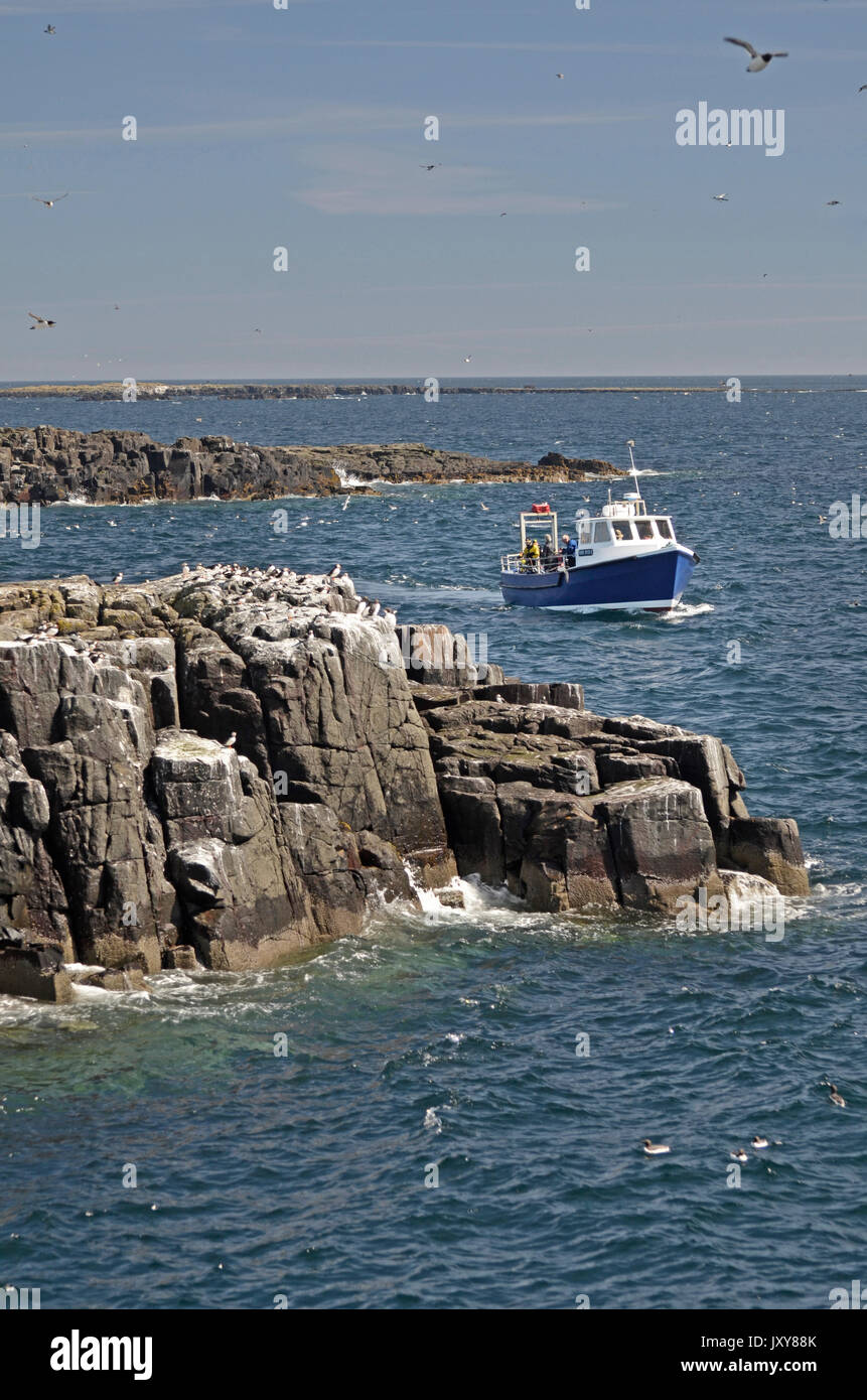 dive boat moving through farne islands, northumberland, great britian Stock Photo