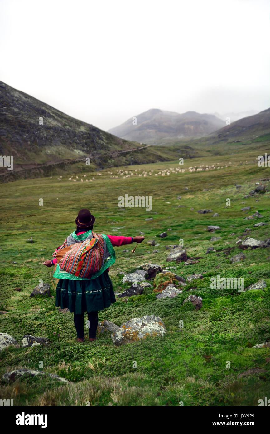 Ayamara woman caring for her herd of alpaca in peru - Stock Image