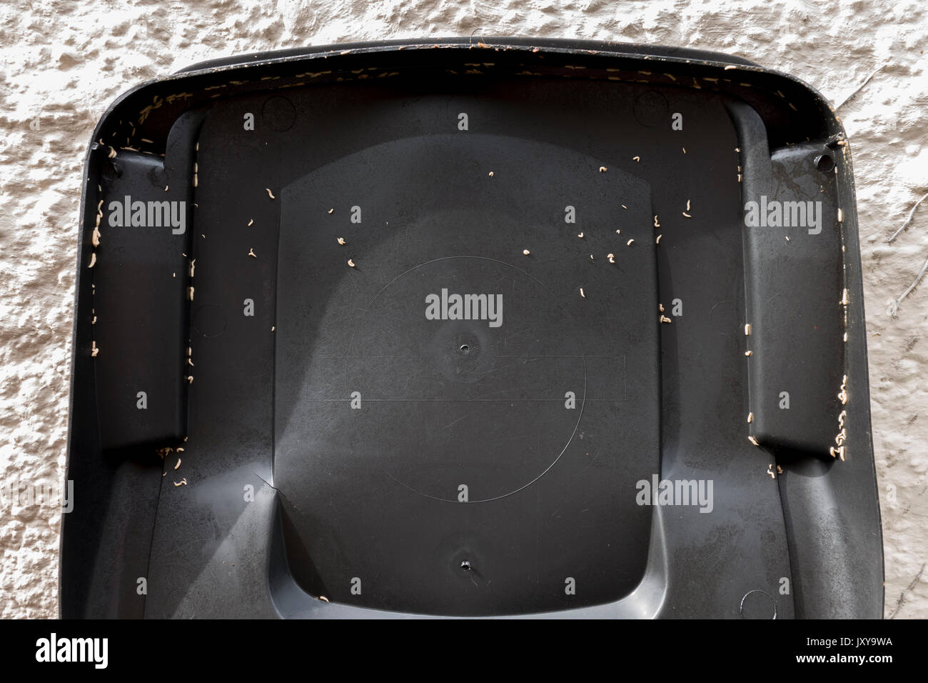 The summer problem of maggots on a food bin lid after a spell of hot weather. England, UK. - Stock Image