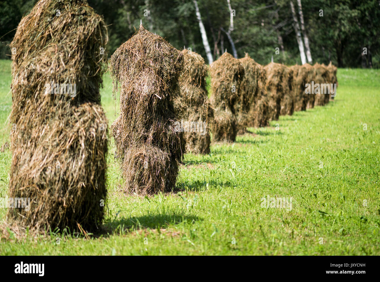An ancient way to dry grass - Stock Image