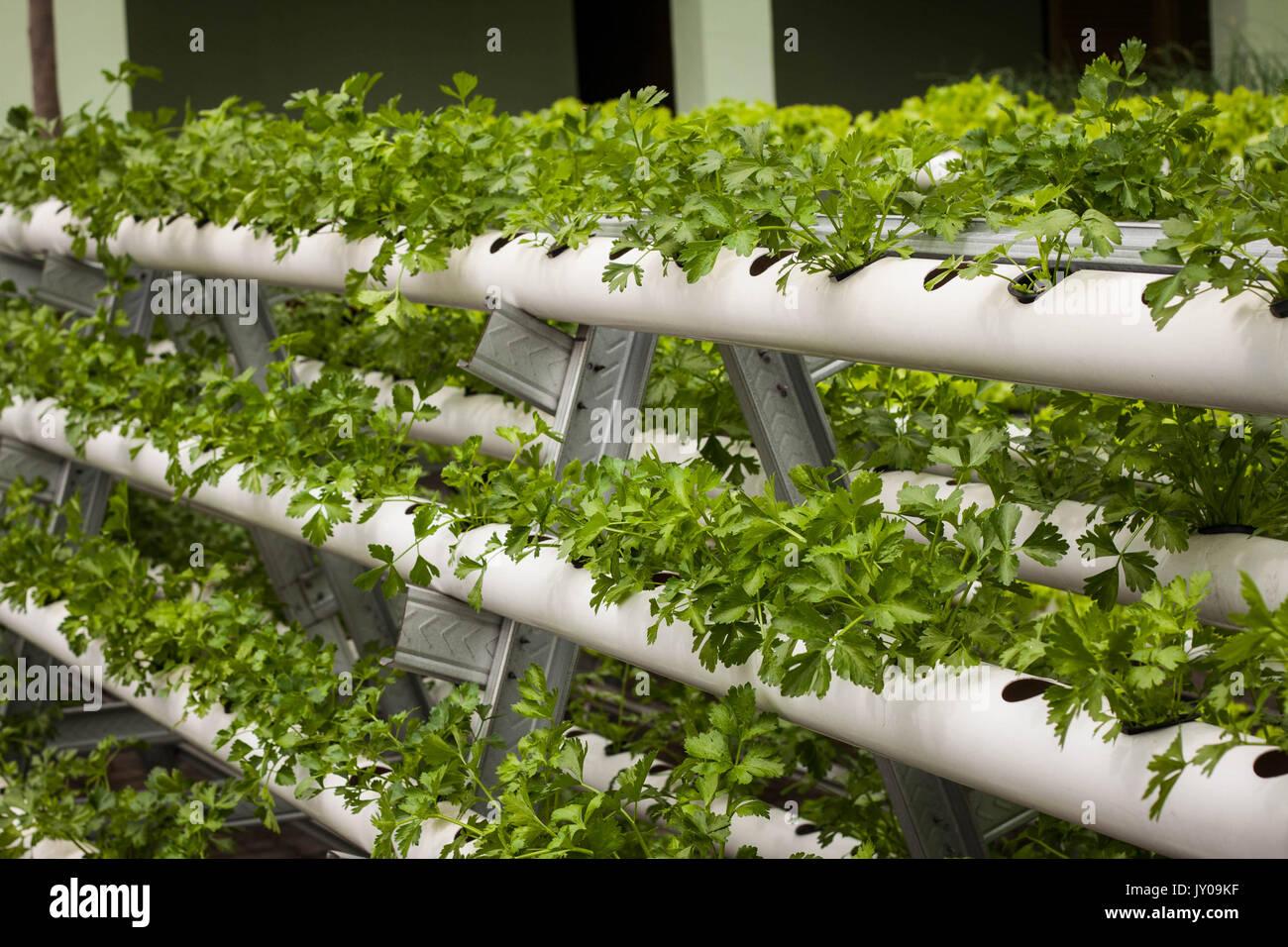 Vertical Garden With Pipe Pvc Photo Taken In Jogja ...