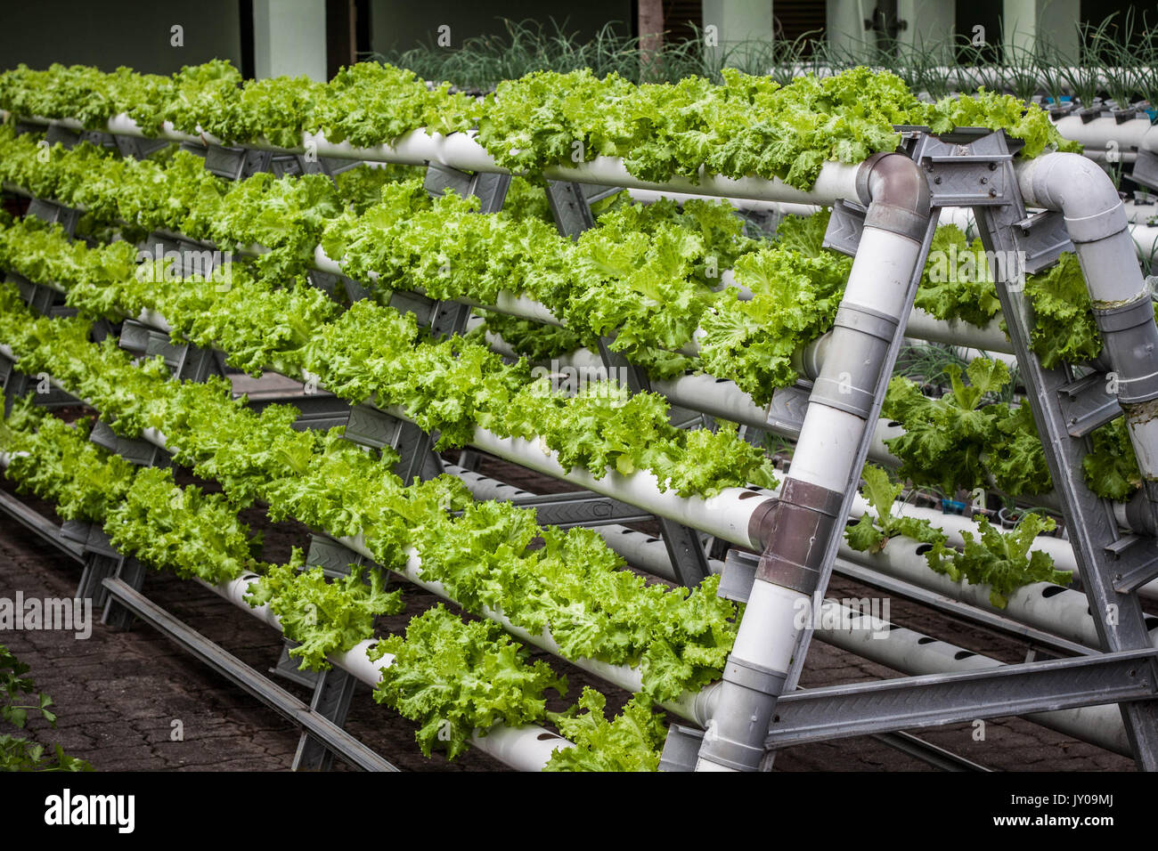 Vertical Garden With Pipe Pvc Photo Taken In Jogja Yogyakarta Indonesia  Java   Stock Image