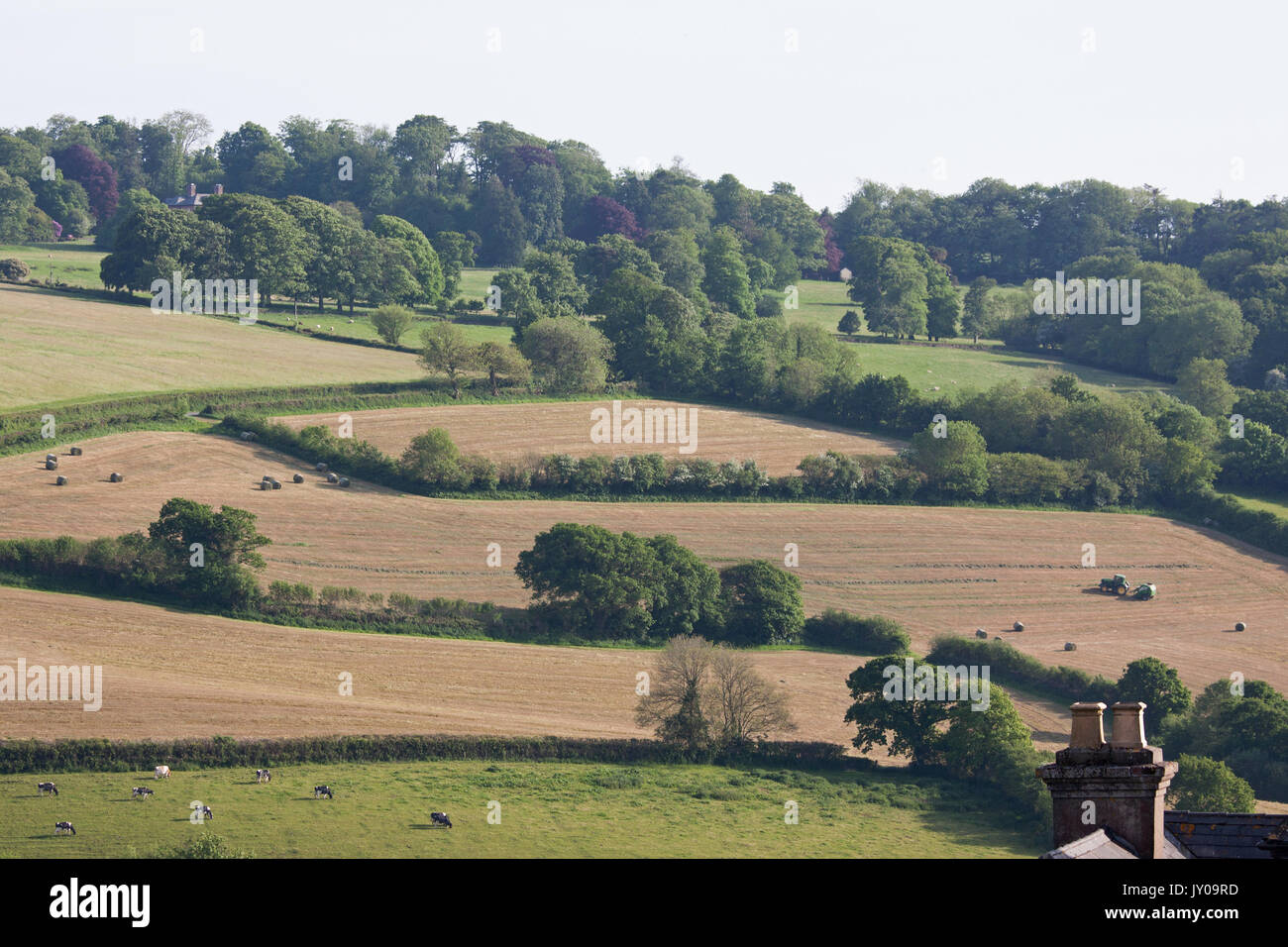 Farm scene during a late afternoon in early summer in the Torridge Valley at Great Torrington in North Devon UK - Stock Image