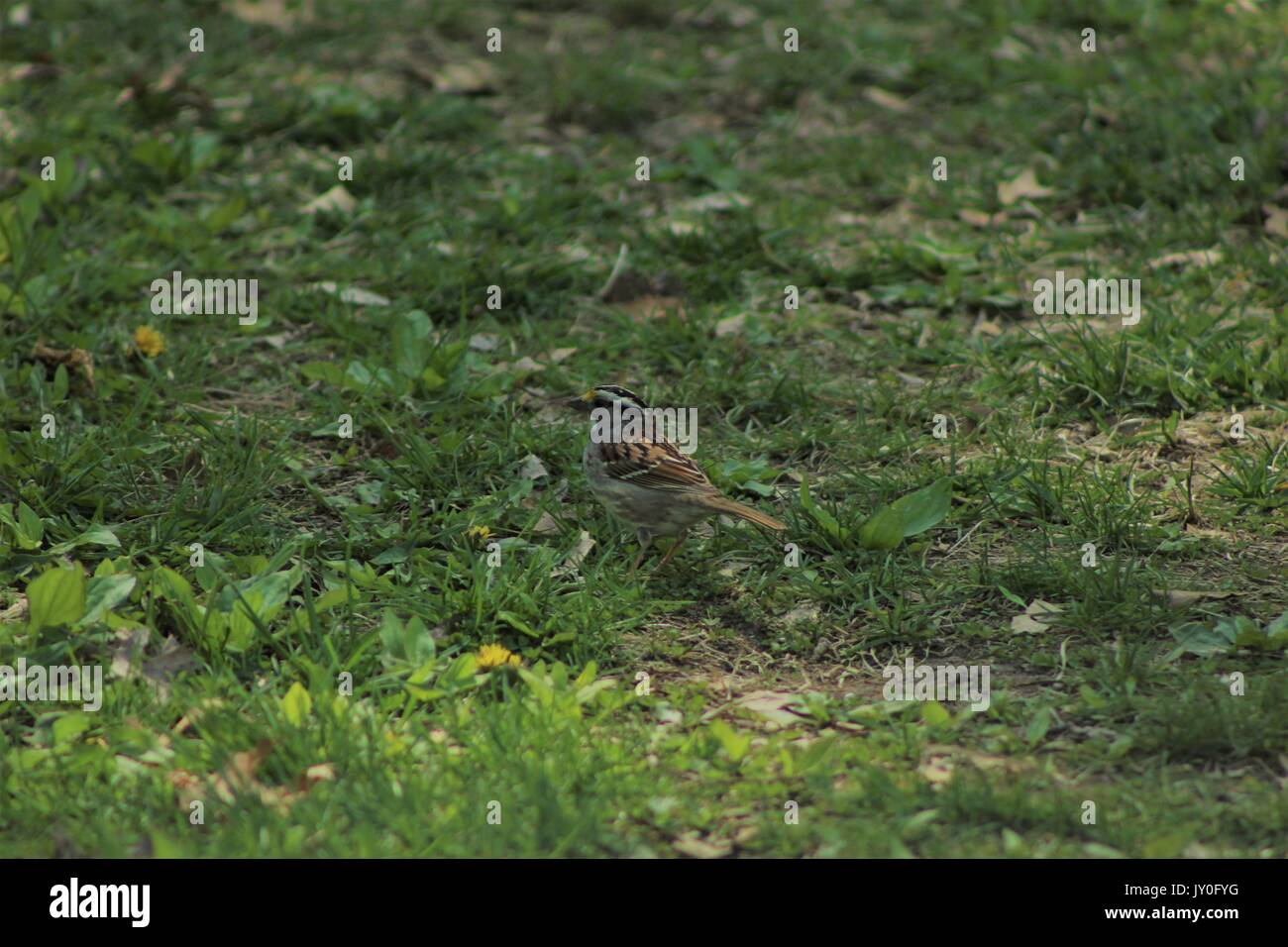 Young summer bird centered in the photo with brown and black feathers. - Stock Image