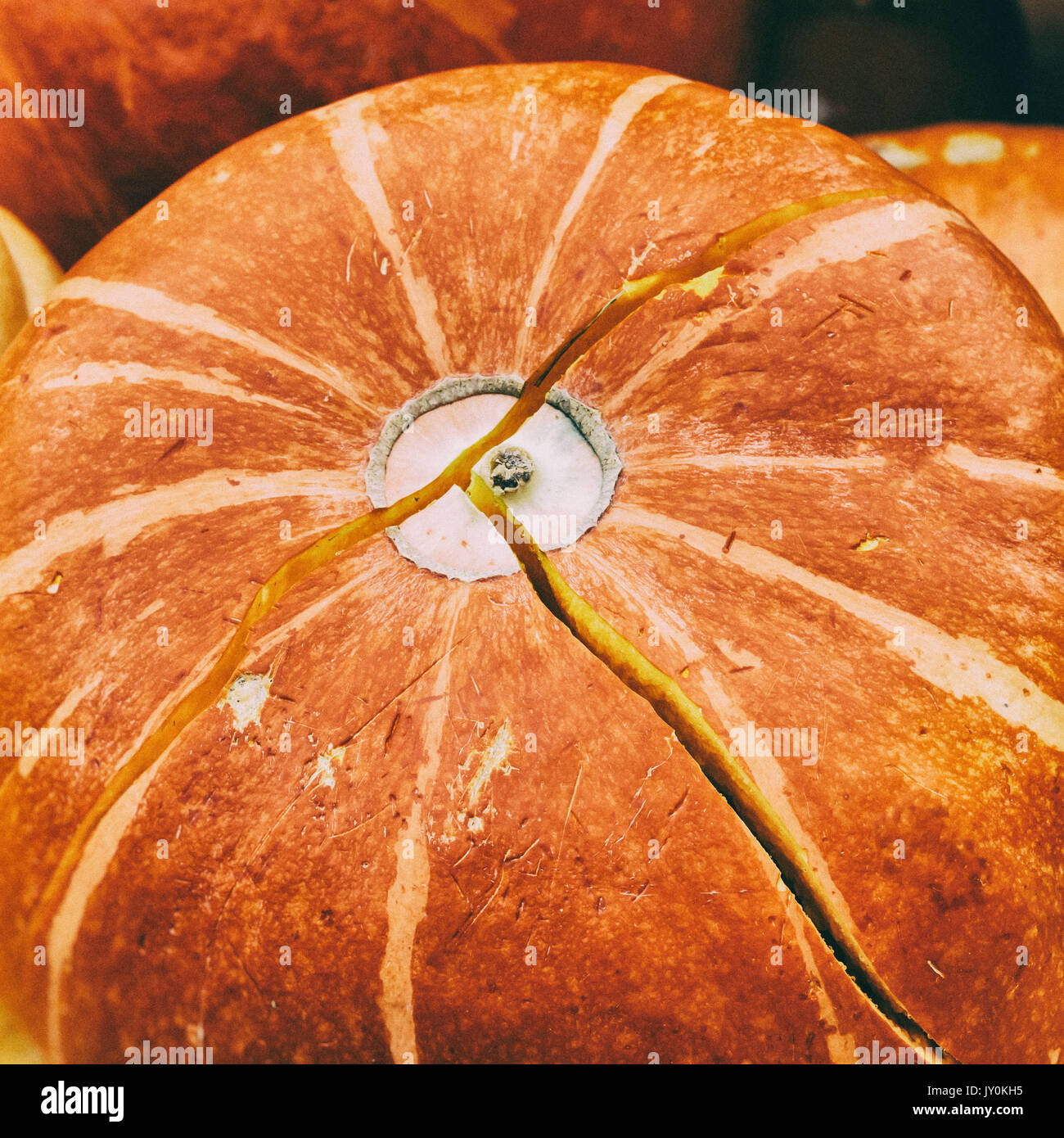 Close Up Ripe Orange Organic Pumpkin With Crack Vintage Colours Rustic Fall Background