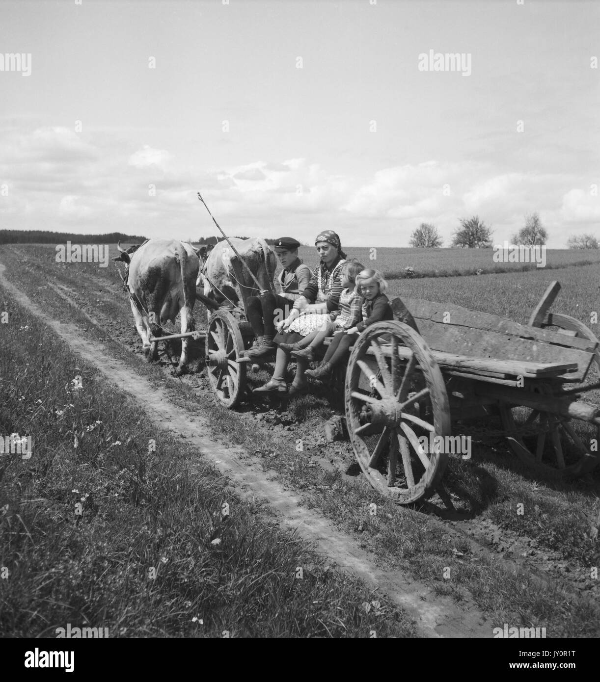 Oxen Pulling Cart Black and White Stock Photos & Images - Alamy