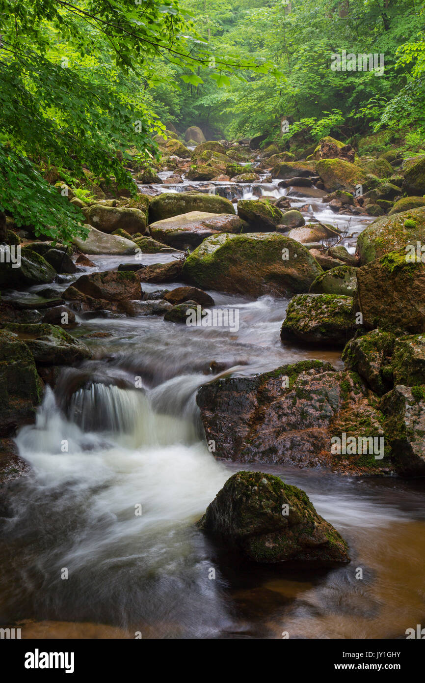 Ilse creek running in the Ilse valley / Ilsetal at the Harz National Park in summer, Saxony-Anhalt, Germany Stock Photo