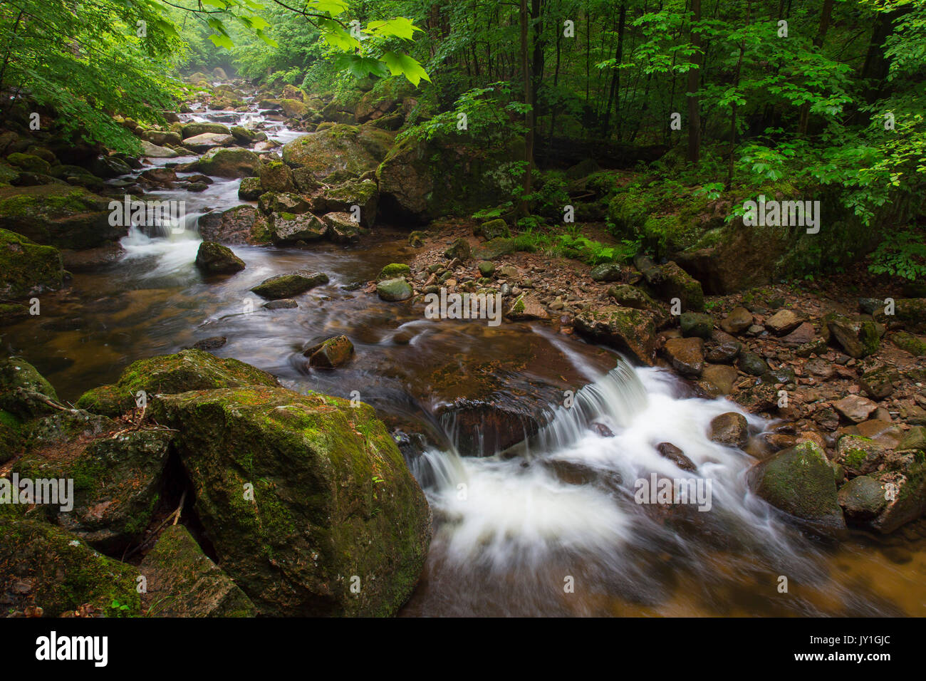 Ilse creek running in the Ilse valley / Ilsetal at the Harz National Park in summer, Saxony-Anhalt, Germany - Stock Image