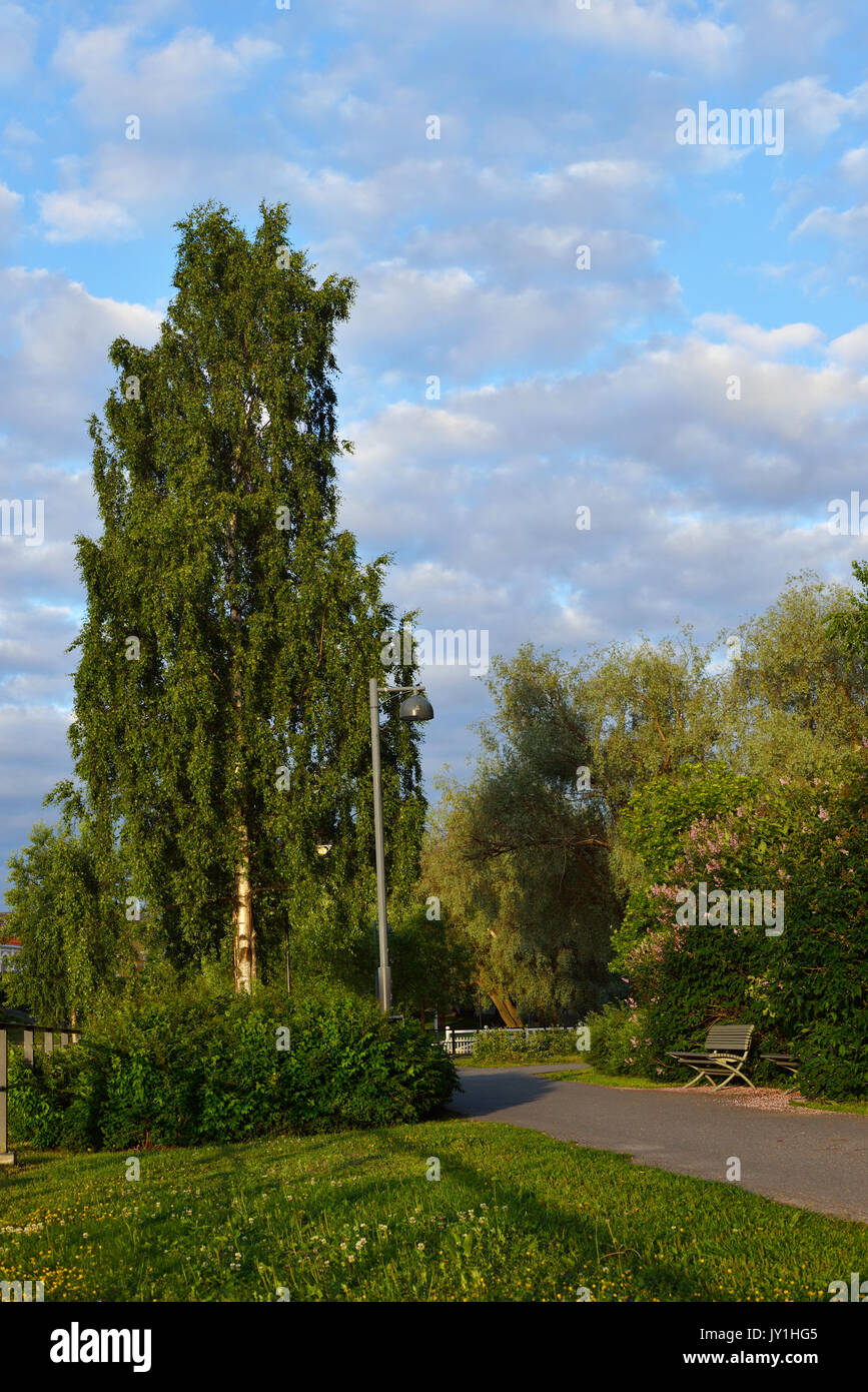 Park in Oulu, Finland. Evening - Stock Image