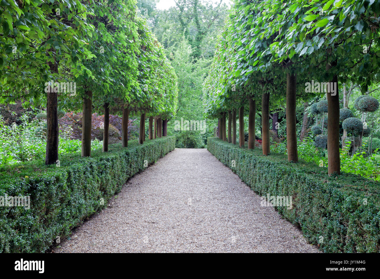 Walking Stone Path Between Rows Of Topiary Trees Growing In A Stock Photo Alamy
