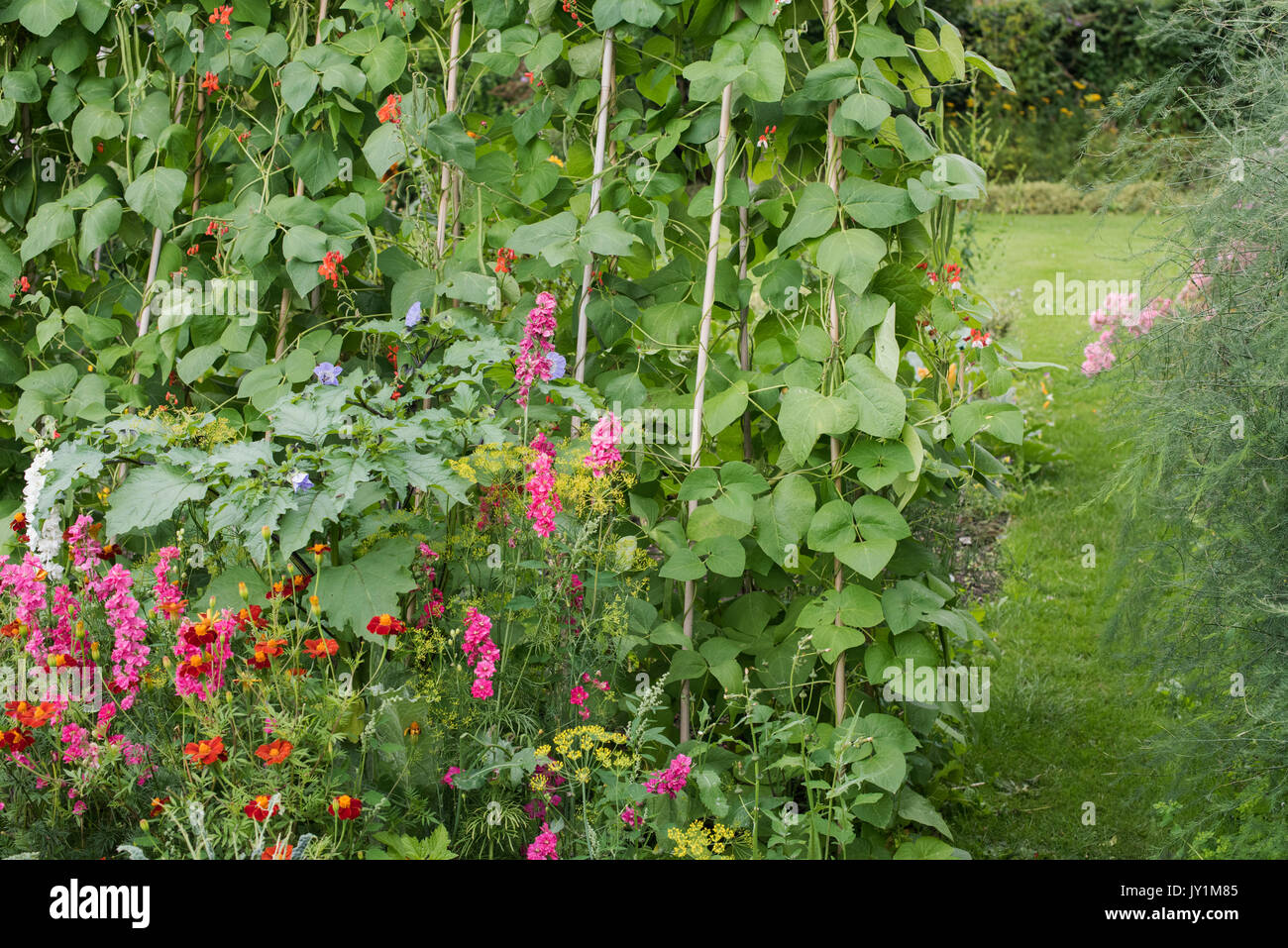 English cottage vegetable and flower garden in late summer. Warwickshire, UK - Stock Image