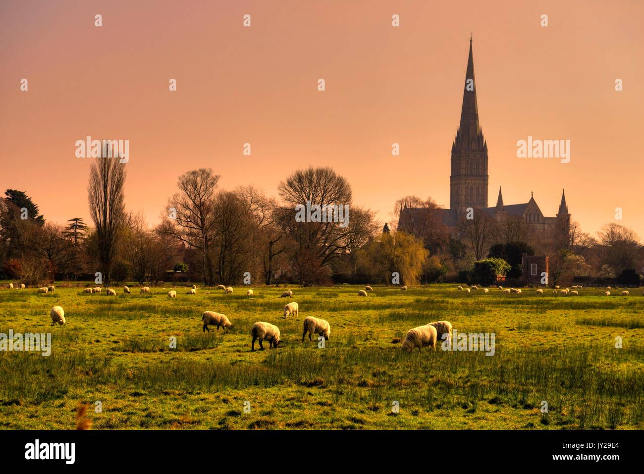 Salisbury Cathedral, seen from Harnham meadows, (processed as an HDR image). Stock Photo