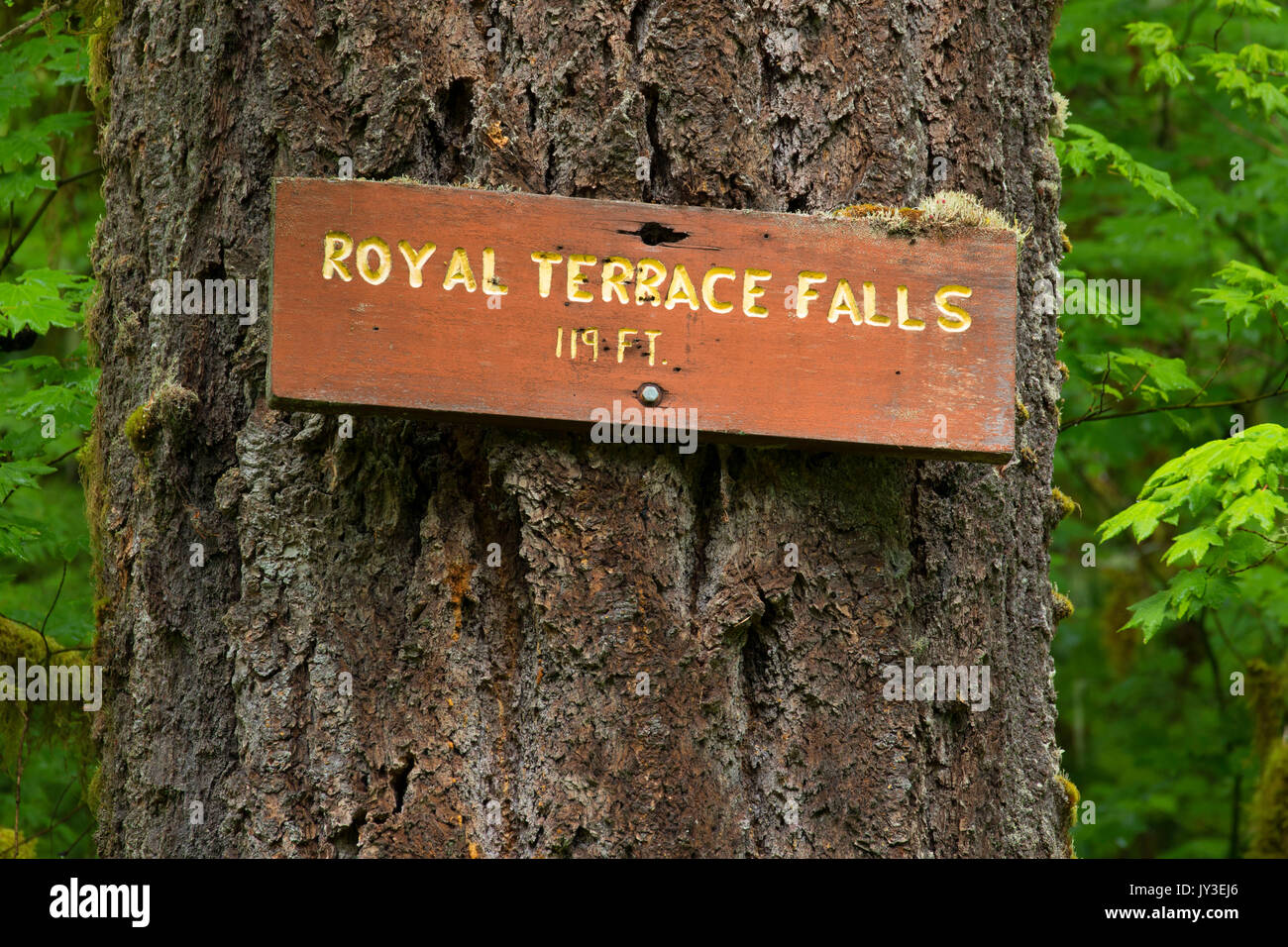 Royal Terrace Falls sign, McDowell Creek County Park, Linn County, Oregon - Stock Image
