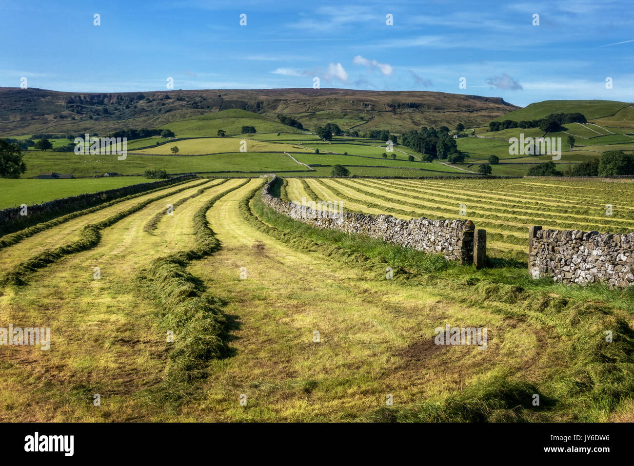 Looking into a freshly mown field of grass with a Yorkshire Dales limestone wall, Hebden, North Yorkshire, UK - Stock Image