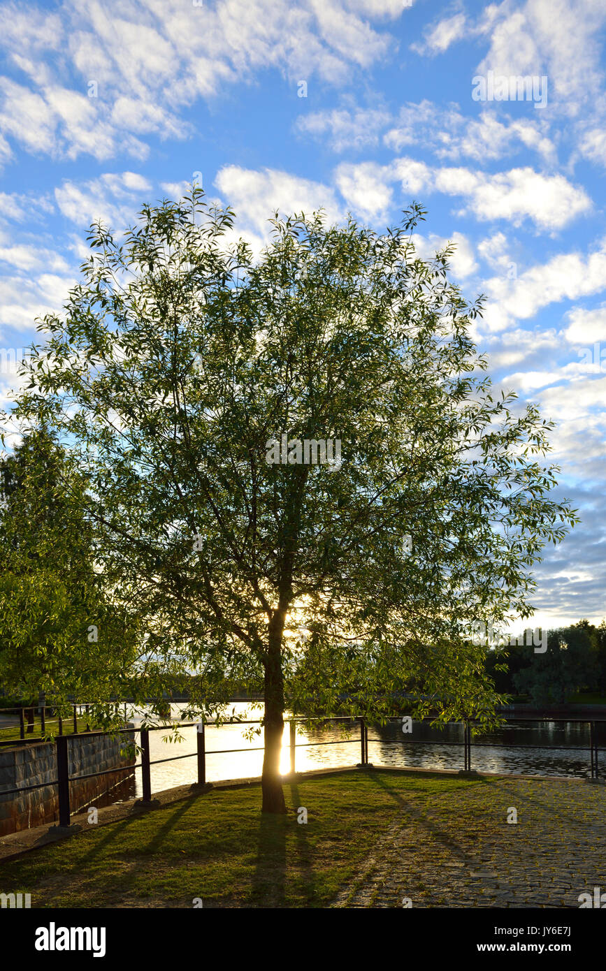 In park on waterfront in Oulu, Northern Finland. Evening - Stock Image