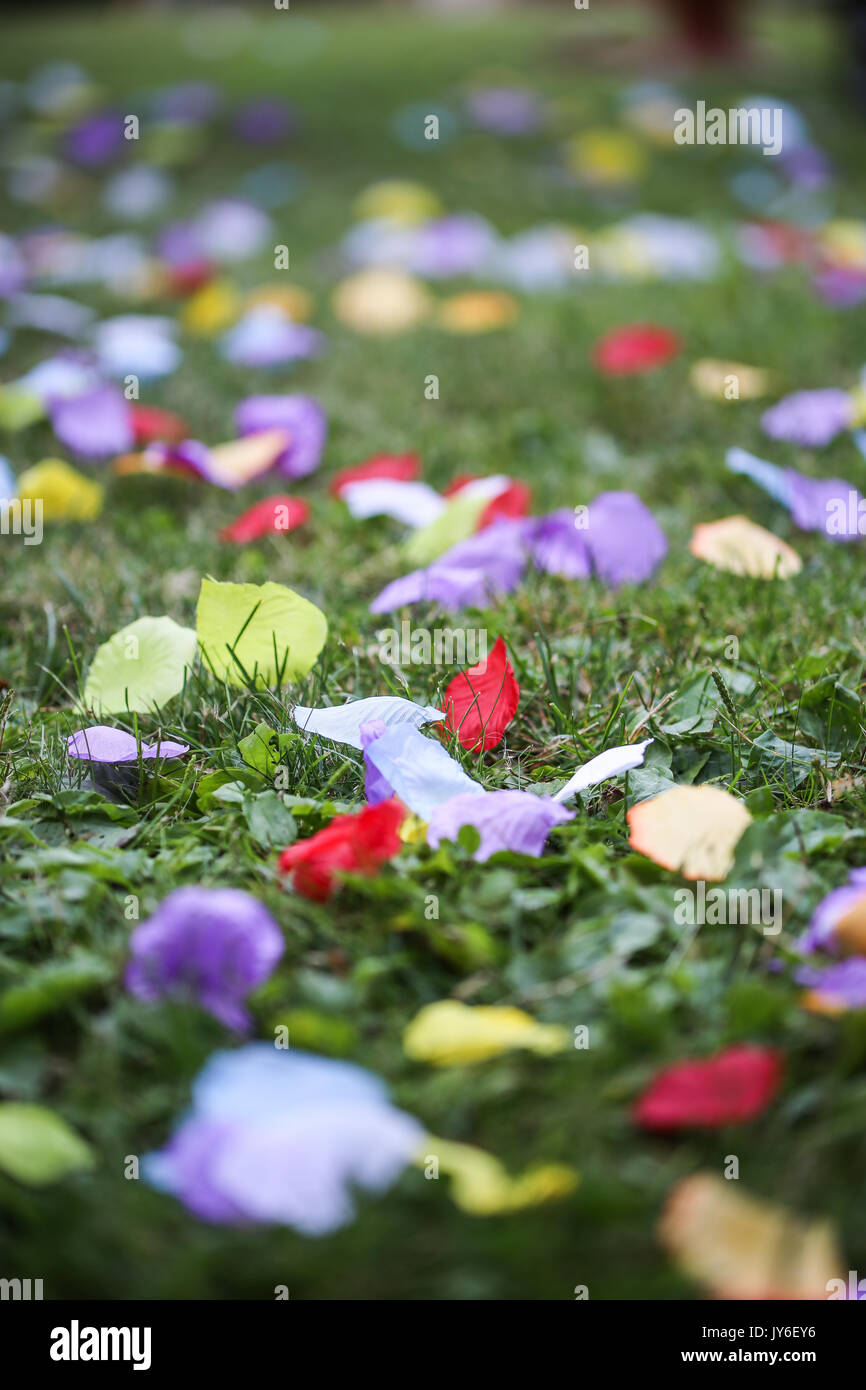 Silk Rose Artificial Petals - Stock Image