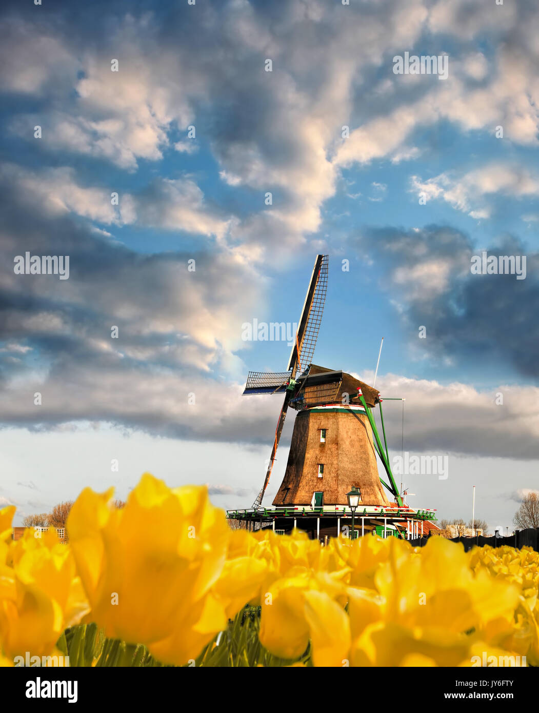 Traditional Dutch windmill with tulips in Zaanse Schans, Amsterdam area, Holland - Stock Image