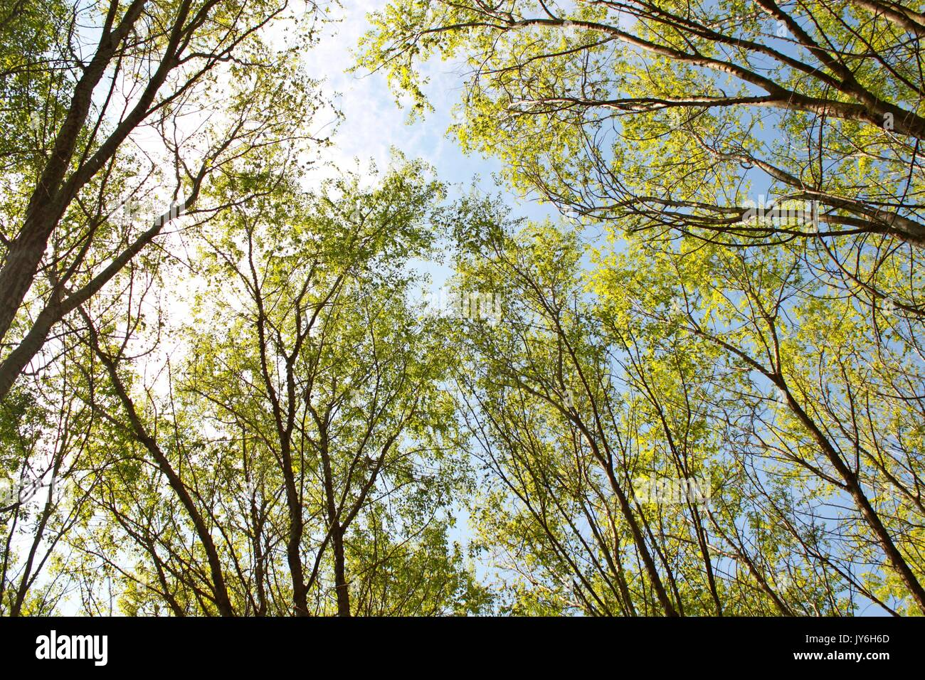 Treetops bellow view - Stock Image