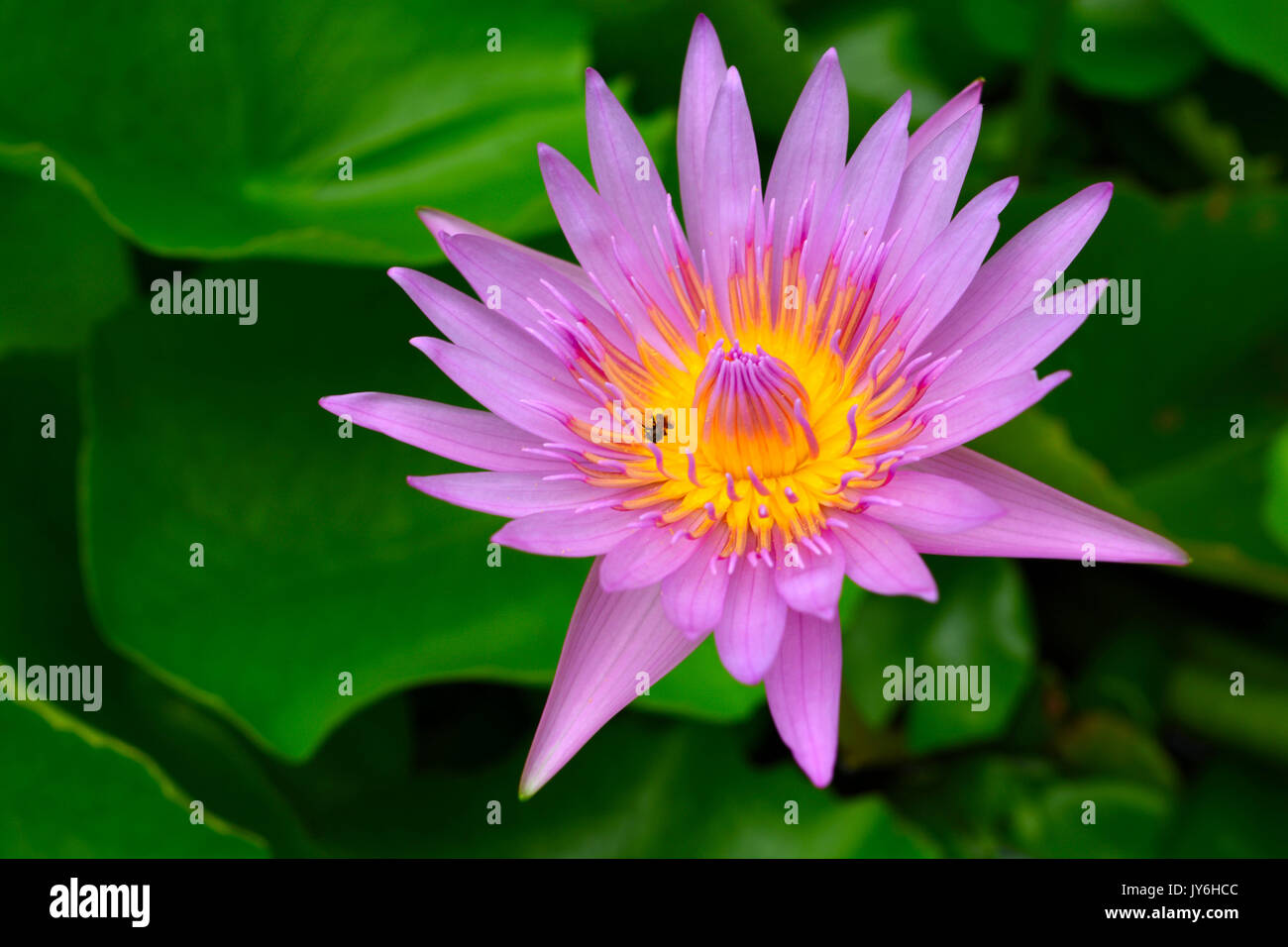 Buddha Lotus Flower Stock Photos Buddha Lotus Flower Stock Images