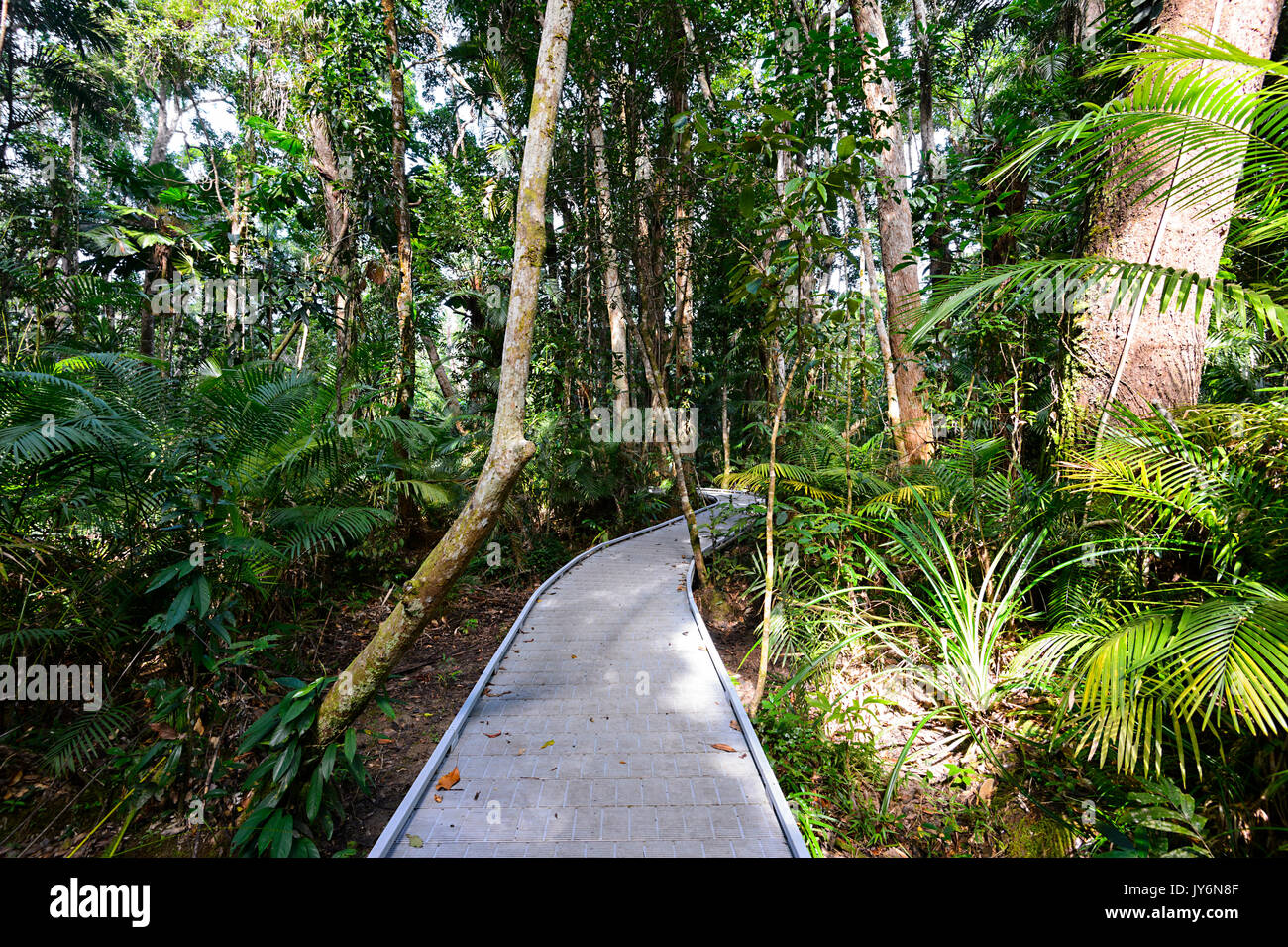Marrdja Boardwalk, Cape Tribulation, Daintree National Park, Far North Queensland, FNQ, QLD, Australia - Stock Image
