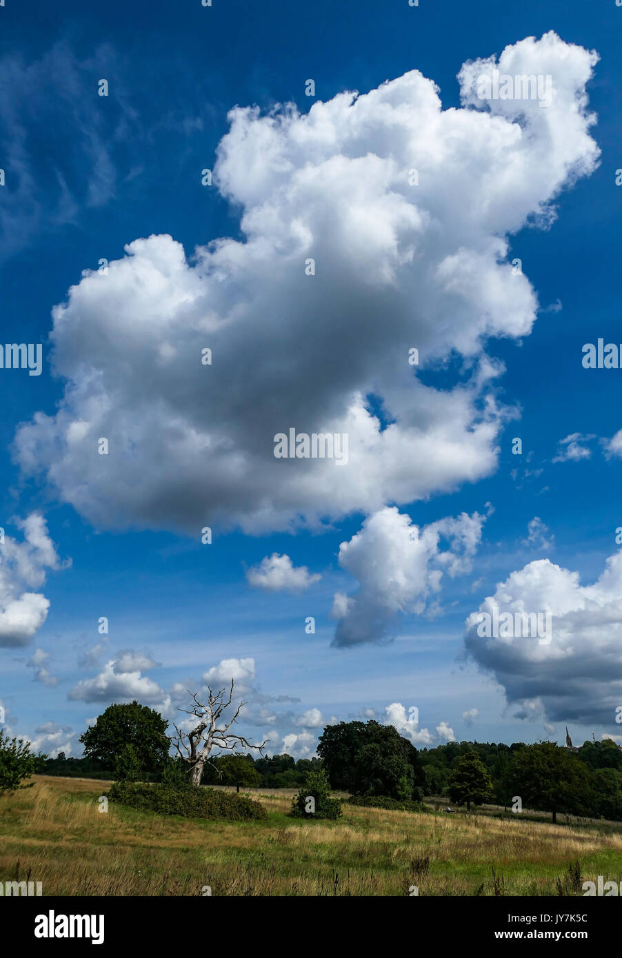Cumulus clouds over Hampstead Heath, London - Stock Image
