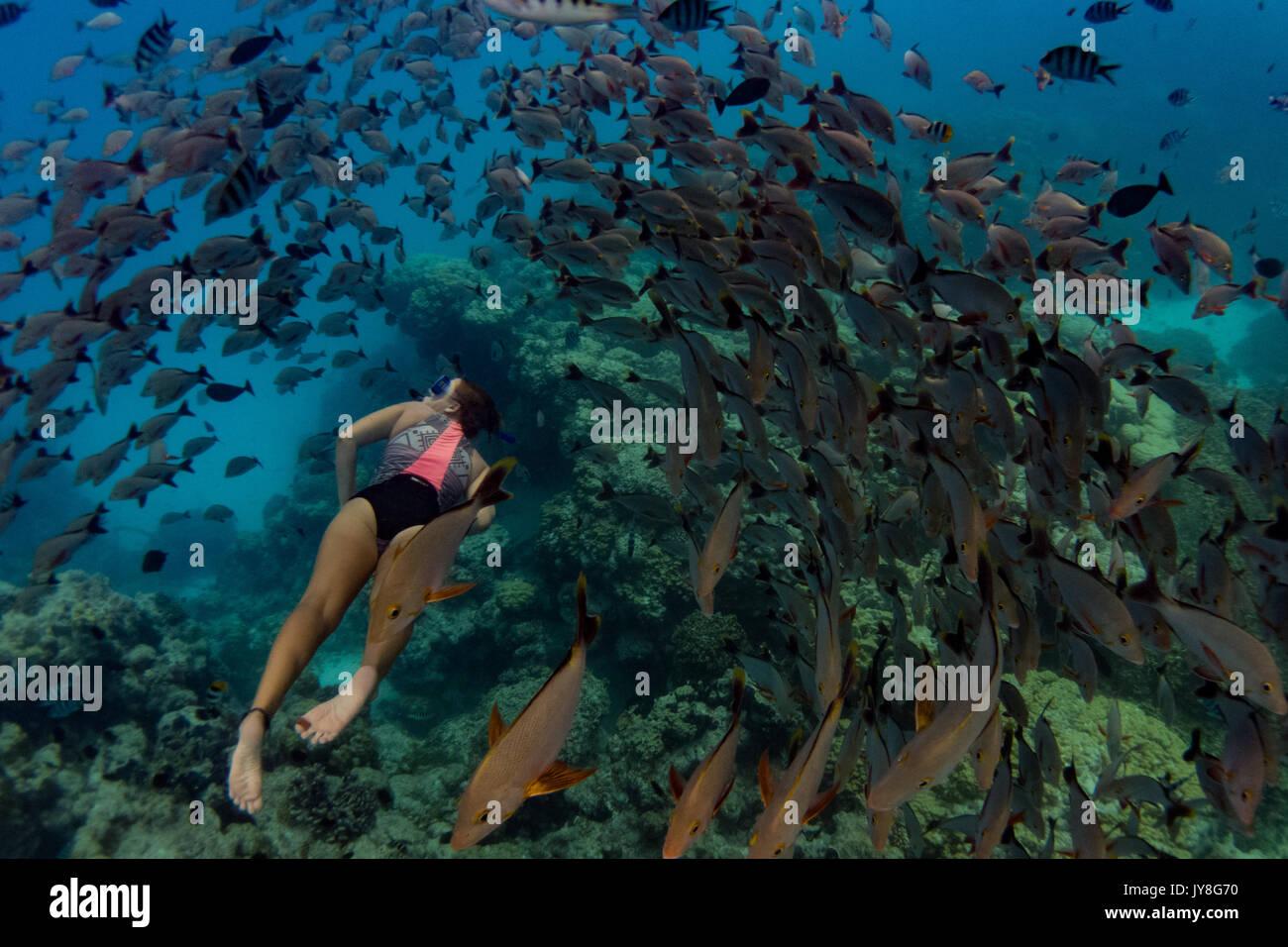 A snorkeler enjoying the massive schools of fish at Rangiroa atoll, French Polynesia - Stock Image