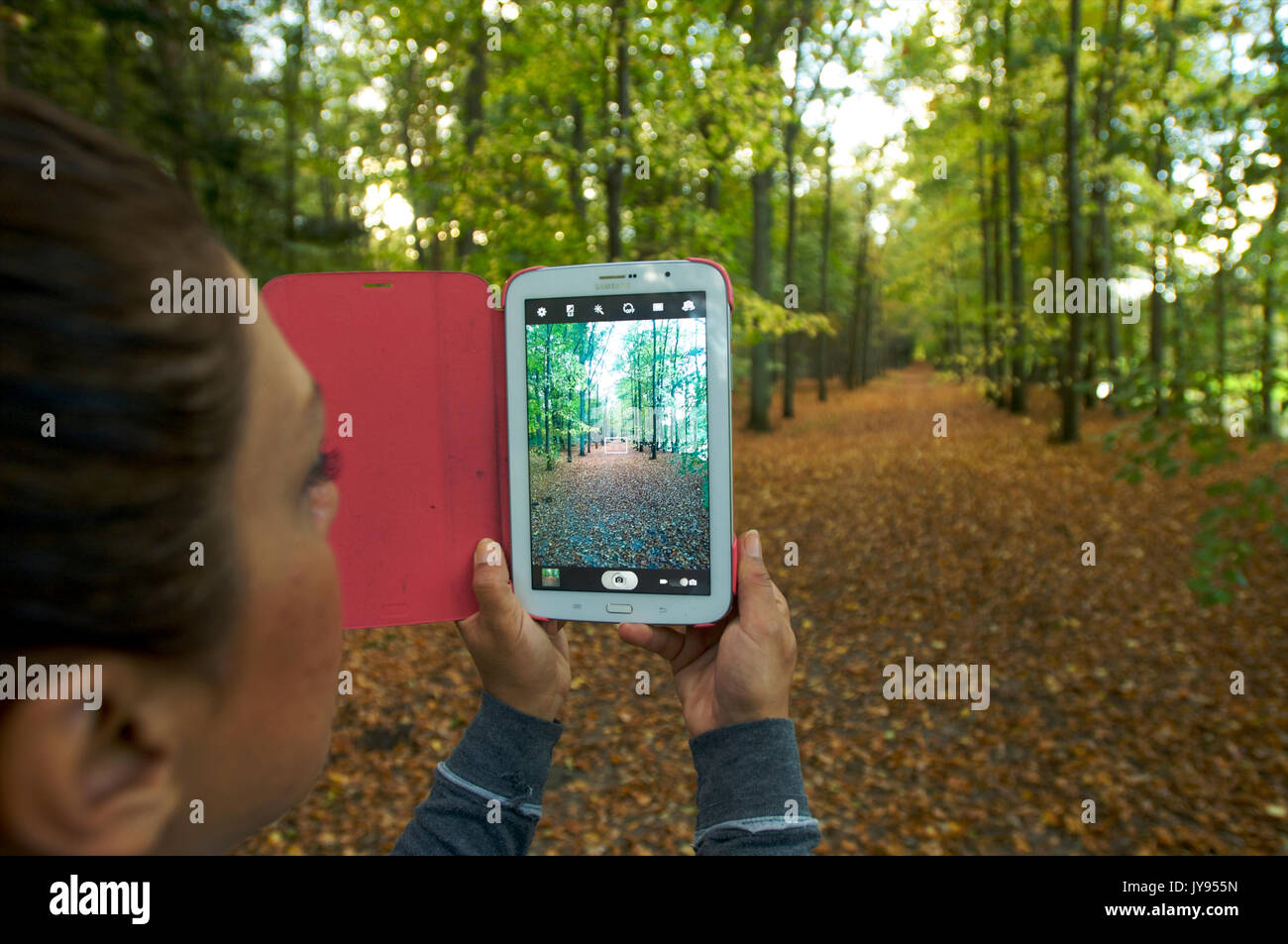 Woman holding a tablet in her hands and  taking a picture in a forest during autumn - Stock Image