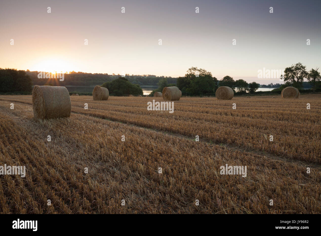 A field of round wheat straw bales at sunrise beside Ravensthorpe reservoir in Northamptonshire, with the sun just - Stock Image