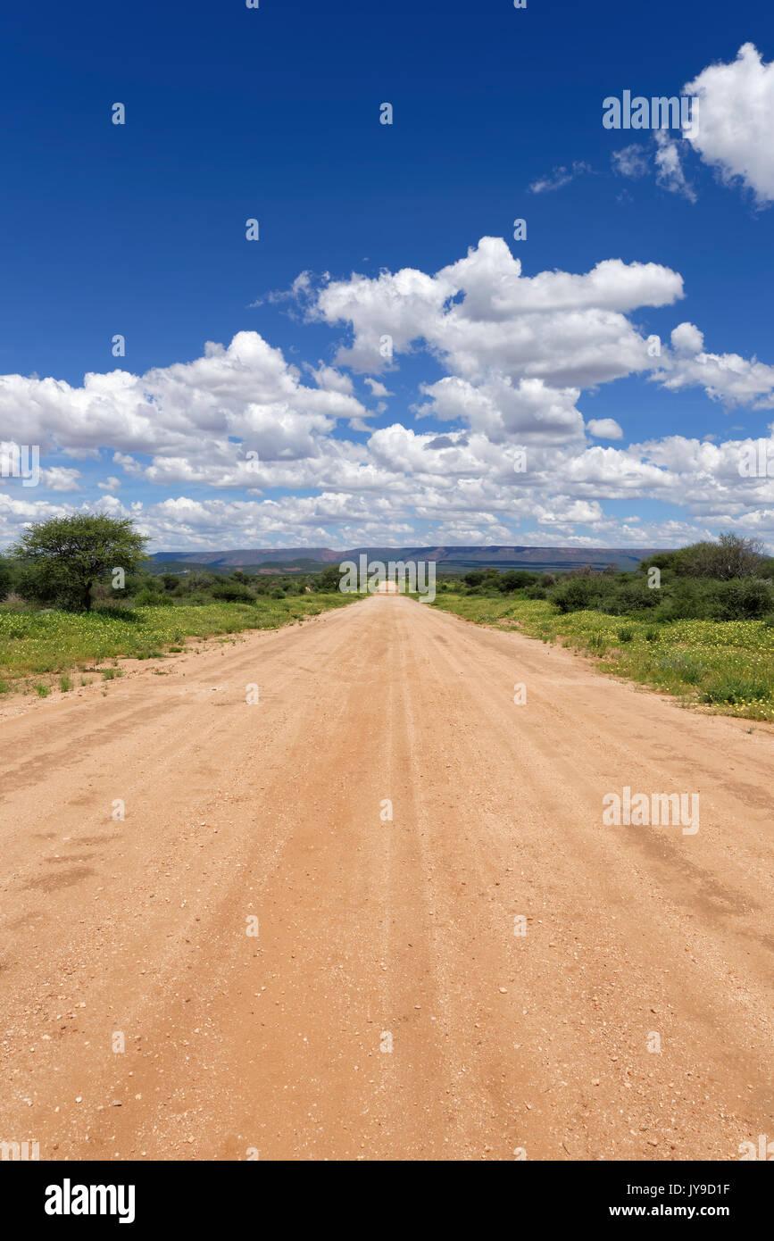 Road D2414 through blooming farmland southeast of Kalkfeld, rainy season, Otjiwarongo District, Otjozondjupa region, Namibia Stock Photo