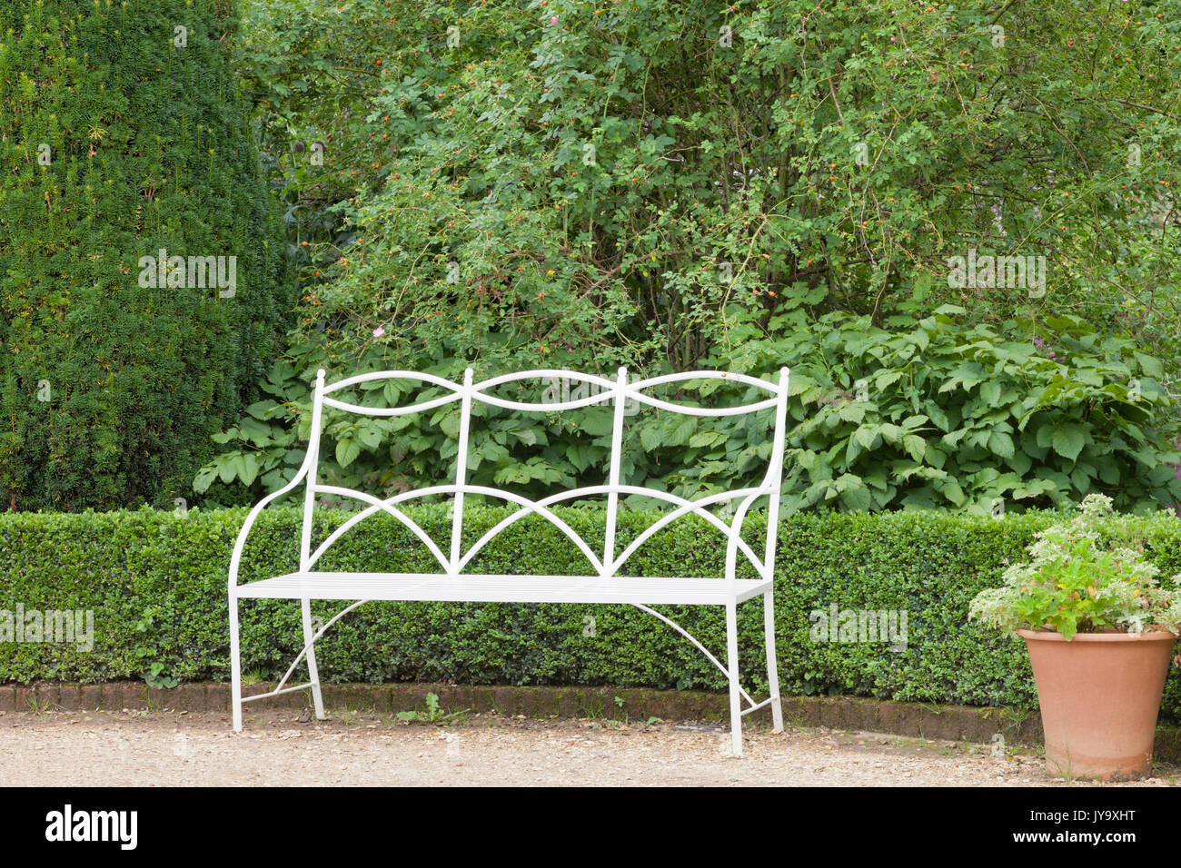Vintage white bench in a garden, by a conifer tree, hedge, green shrubs and flower pot . - Stock Image