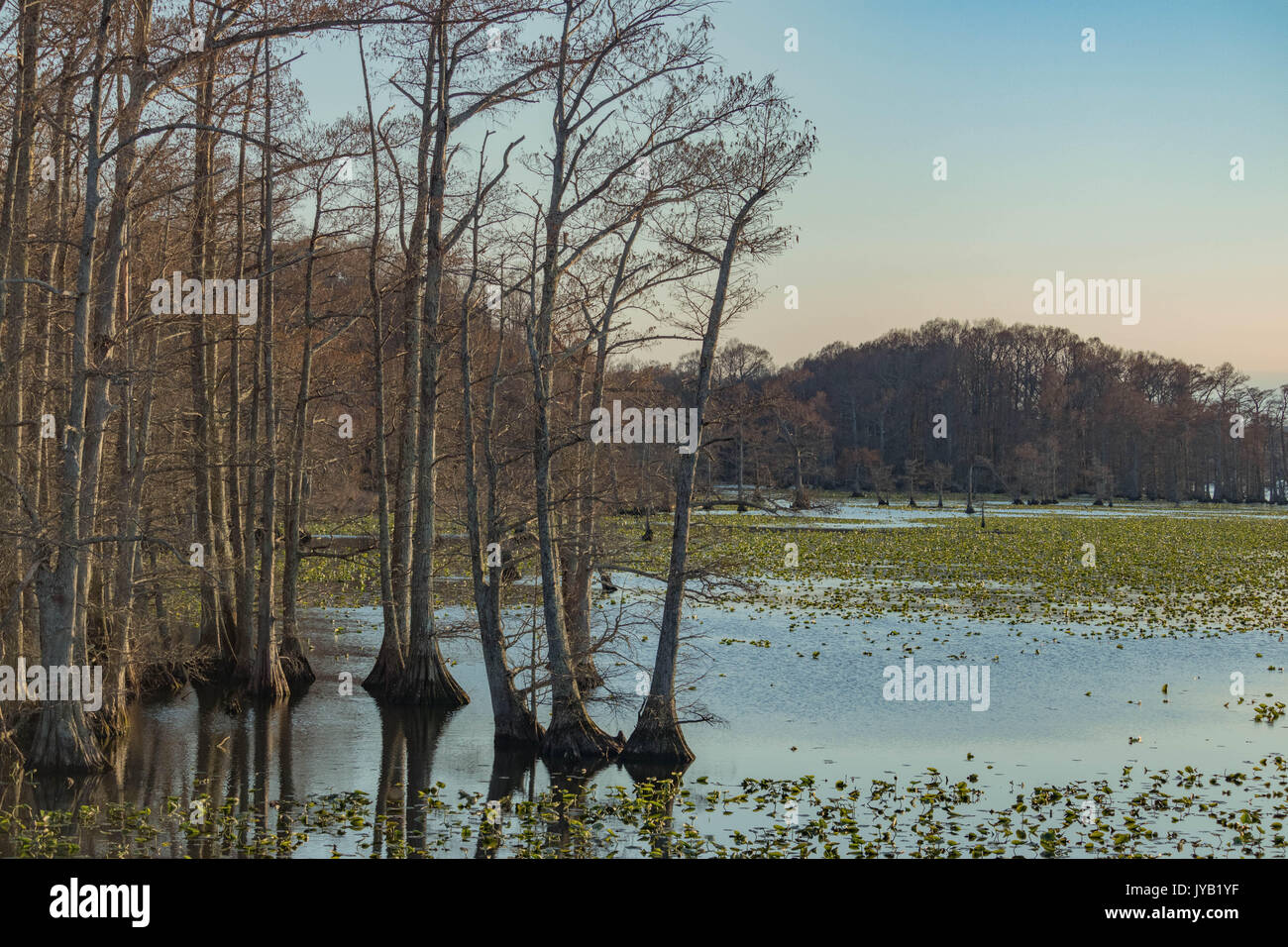 Reelfoot Lake Tennessee Stock Photos & Reelfoot Lake Tennessee Stock