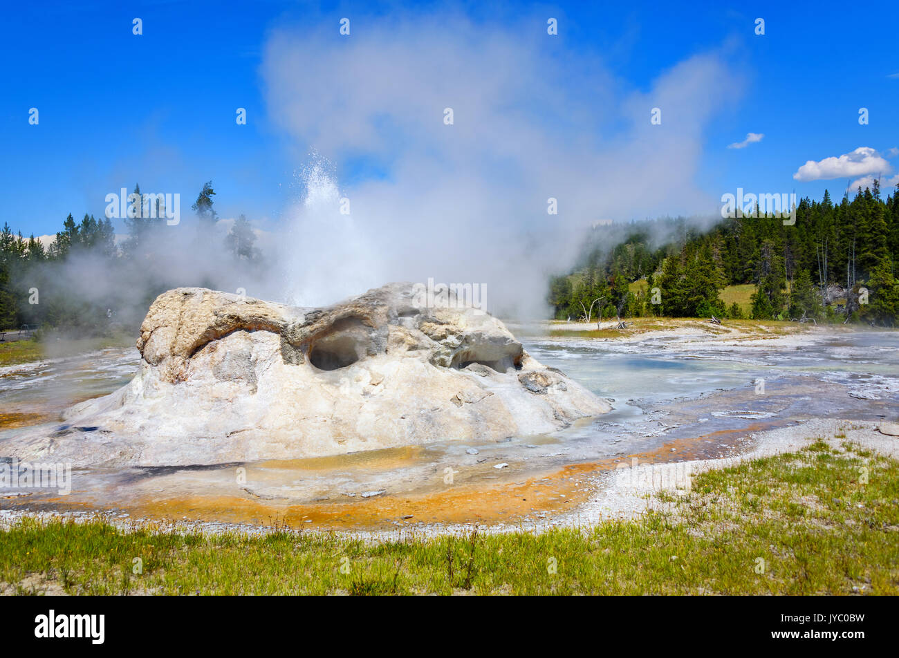 Steam and erupting waters of Grotto Geyser in Upper Geyser Basin. Yellowstone National Park - Stock Image