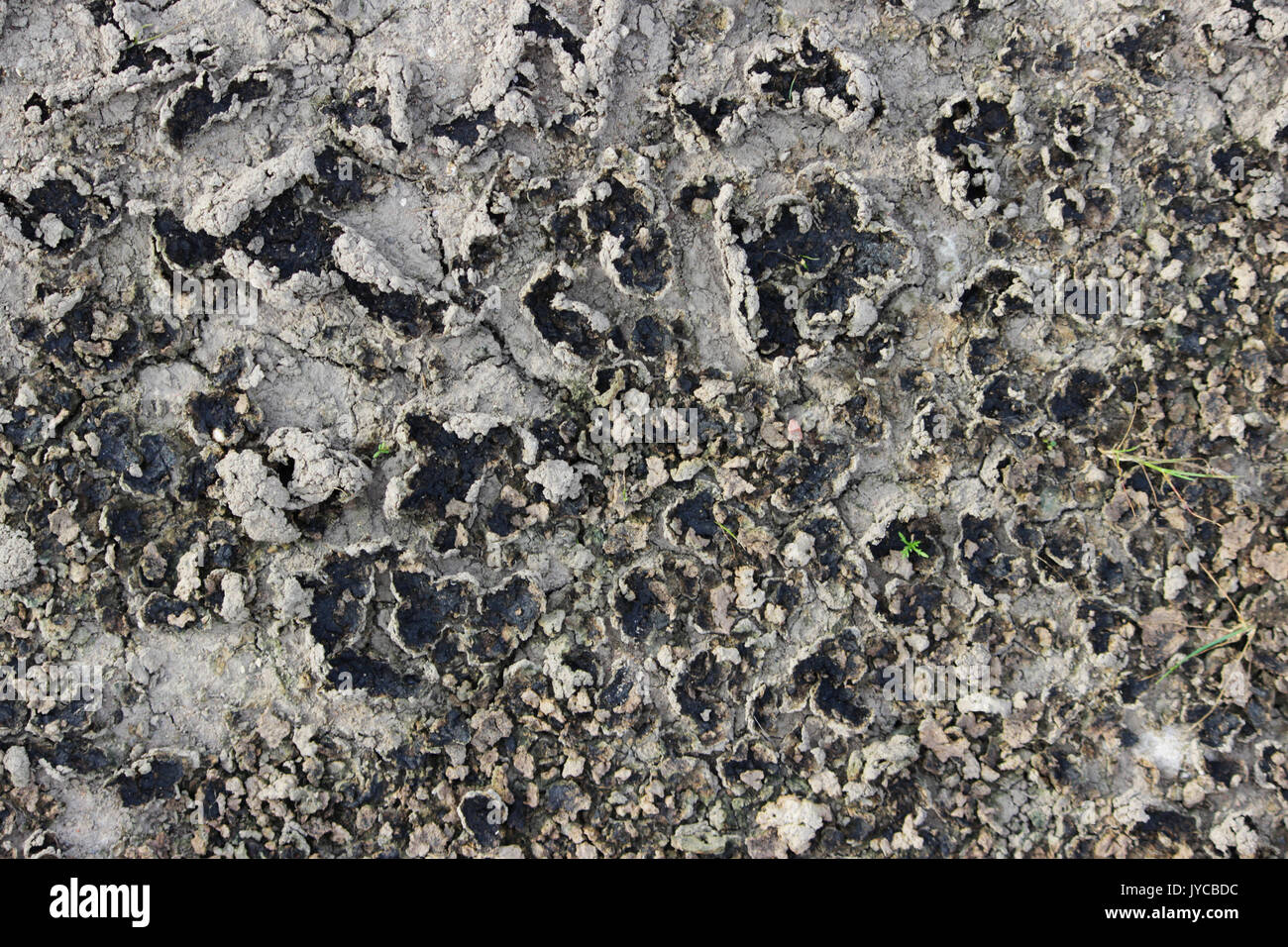Drought. Dried bottom of lake, river, sea. Dry fractured soil of drought. Concept of drought, climate change, death without moisture. Ecology. Catastrophe. Mysticism. - Stock Image