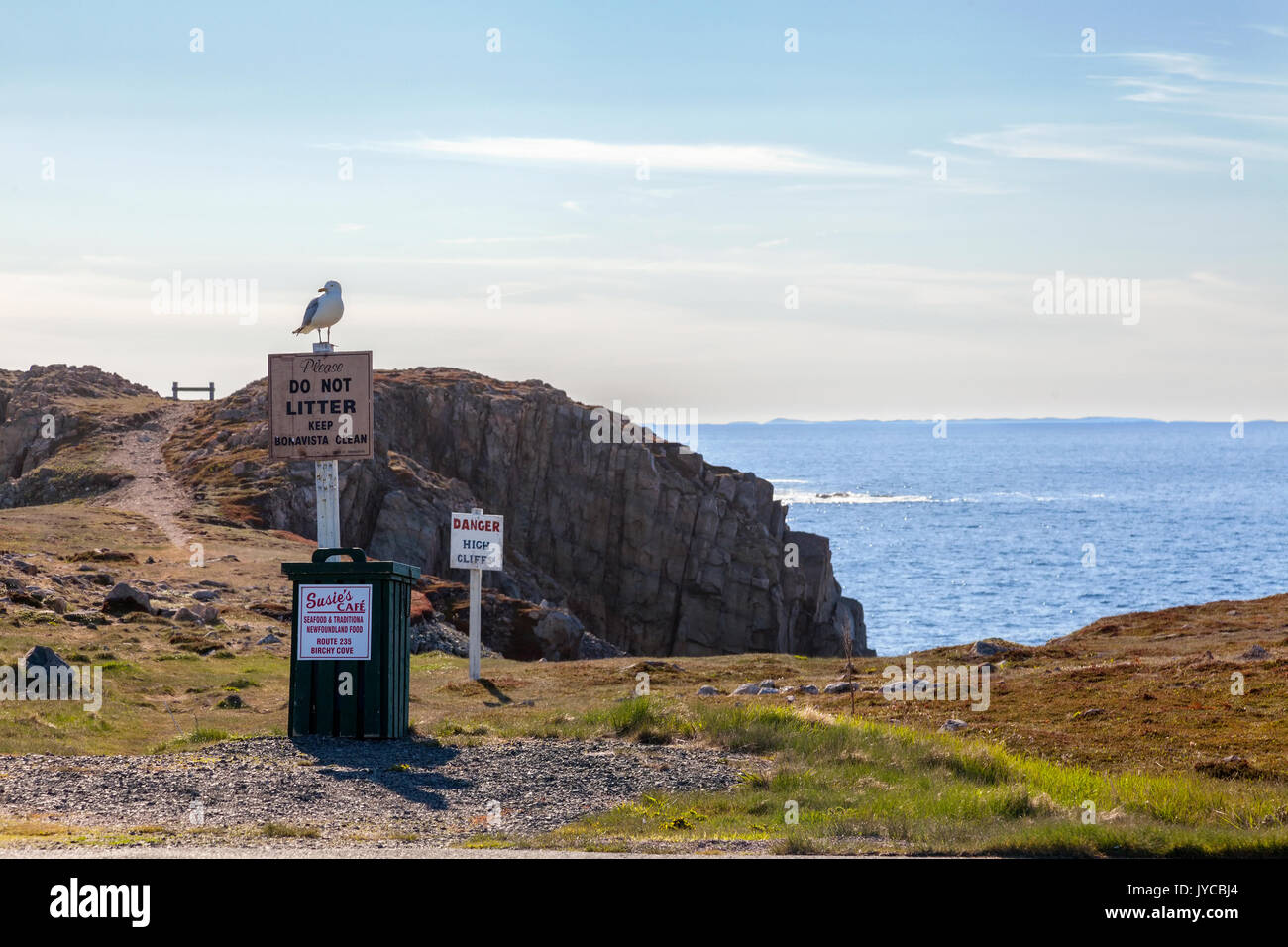 A seagull standing on a do not litter sign with a view of the rocky landscape and the Atlantic Ocean in Bonavista,, Newfoundland and Labrador, Canada. - Stock Image