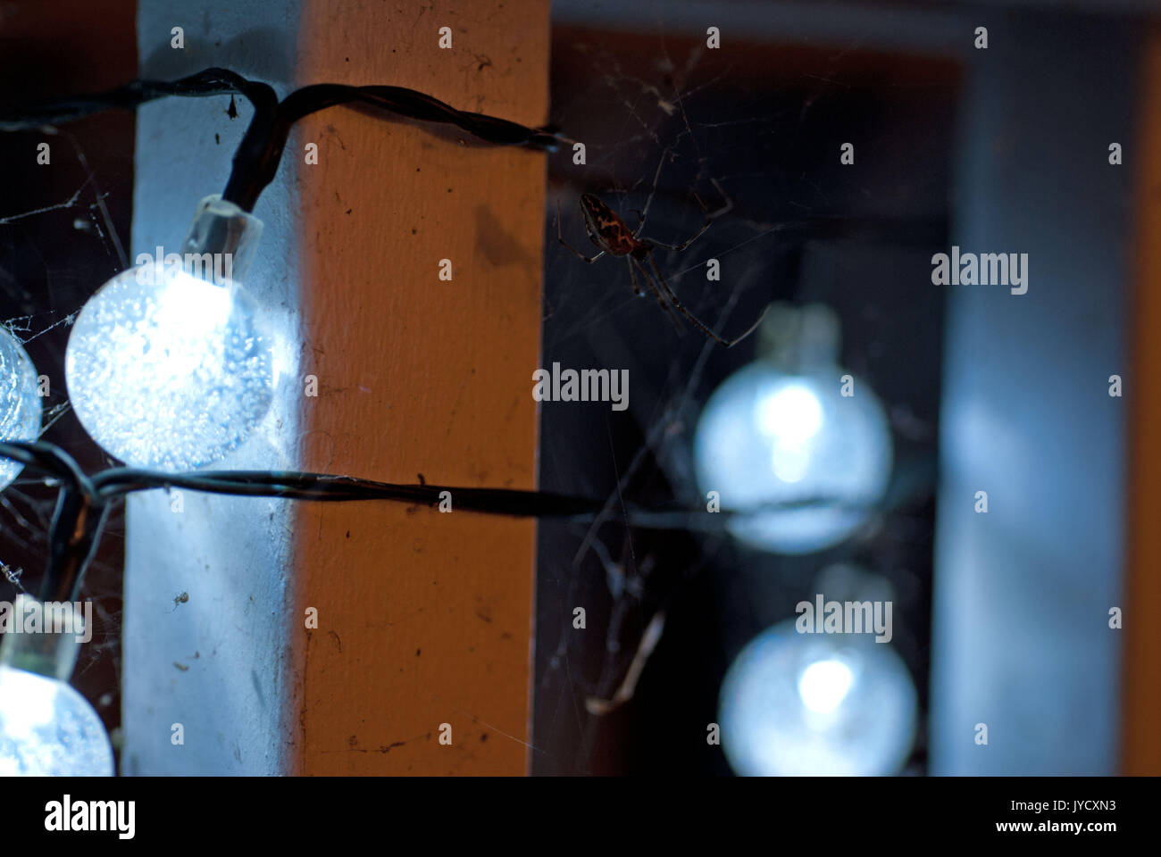 Macro shots of spiderwebs built on bluish sphere string lights - Stock Image