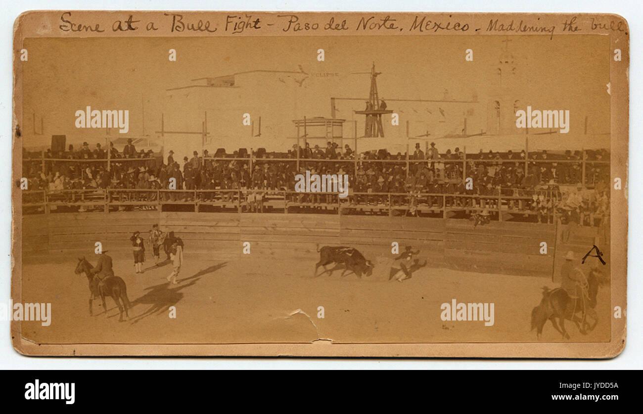 Scene at a Bull Fight - Paso del Norte, Mexico - Maddening the bull. - Stock Image