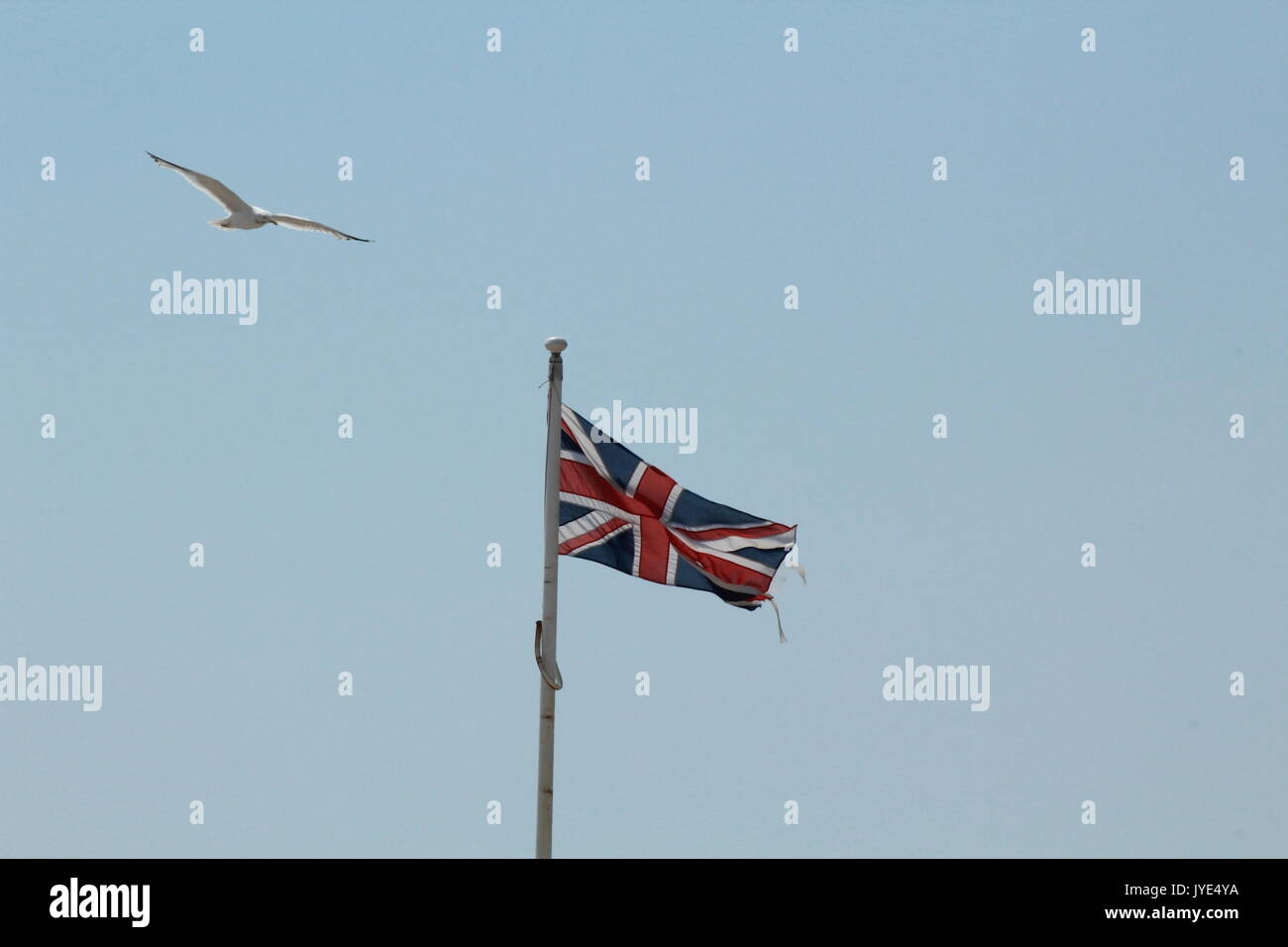 seagull flying over union flag - Stock Image