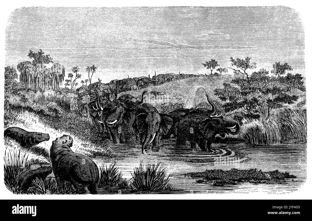 Animal life on Lake Chad : elephants, hippopotamuses - Stock Image