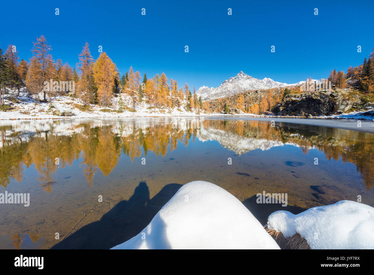 Red larches frame the frozen Lake Mufule Malenco Valley province of Sondrio Valtellina Italy Europe Stock Photo