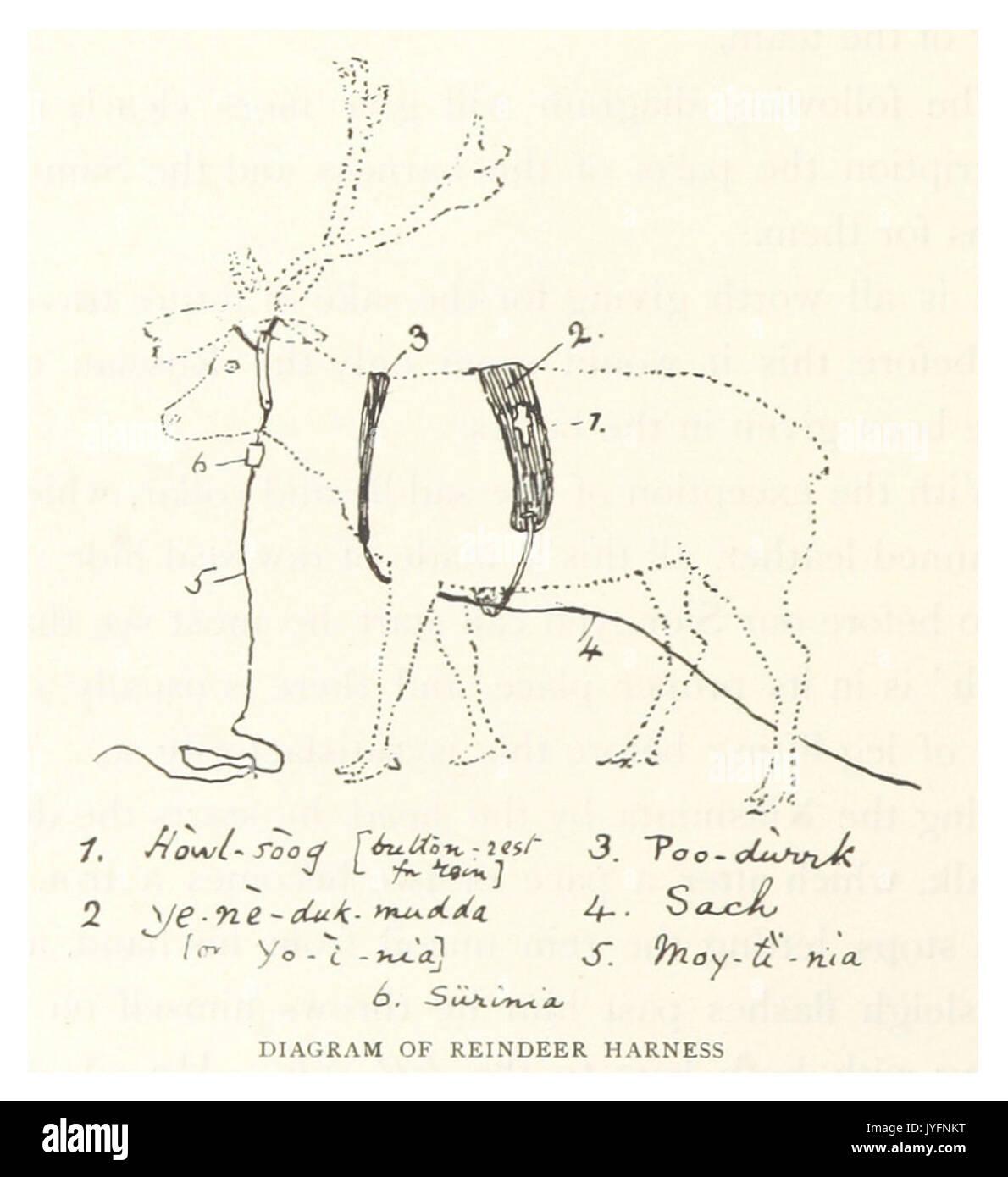 tb1895 p414 reindeer harness JYFNKT tb(1895) p414 reindeer harness stock photo 154624956 alamy