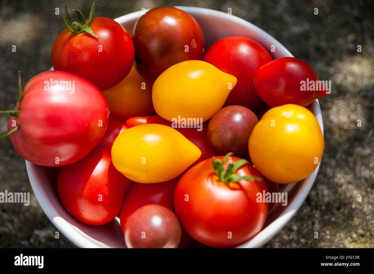 Varieties of Tomatoes - Stock Image