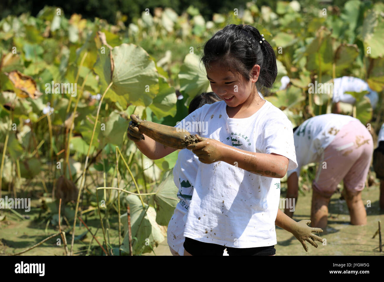 Hengyang, China's Hunan Province. 19th Aug, 2017. A children collects the lotus root at a summer camp in Hengyang, central China's Hunan Province, Aug. 19, 2017. Various extracurricular activities attracted many young students in China in the summer vacation time. Credit: Liu Xinrong/Xinhua/Alamy Live News - Stock Image