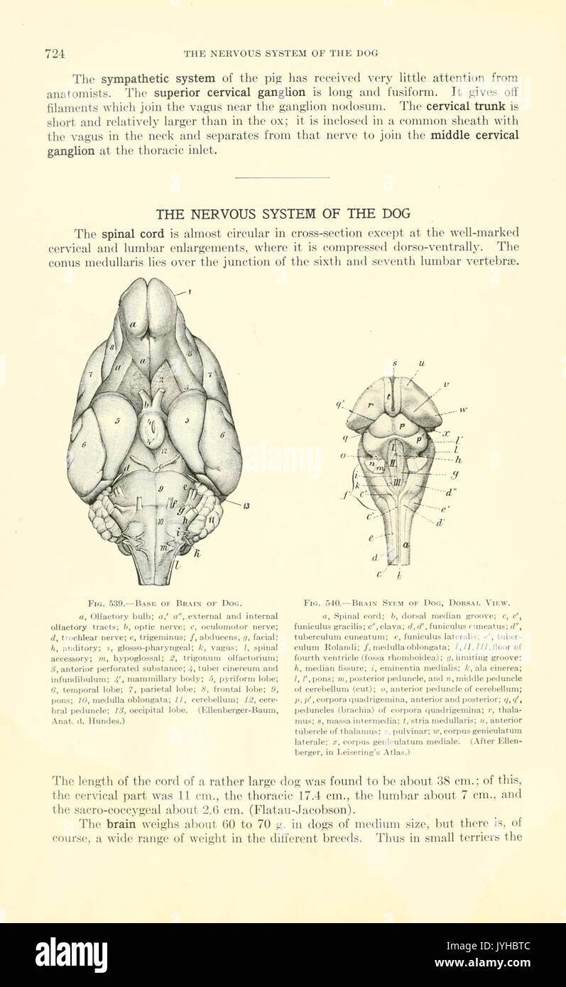 A text book of veterinary anatomy (Page 724) BHL18587848 Stock Photo ...